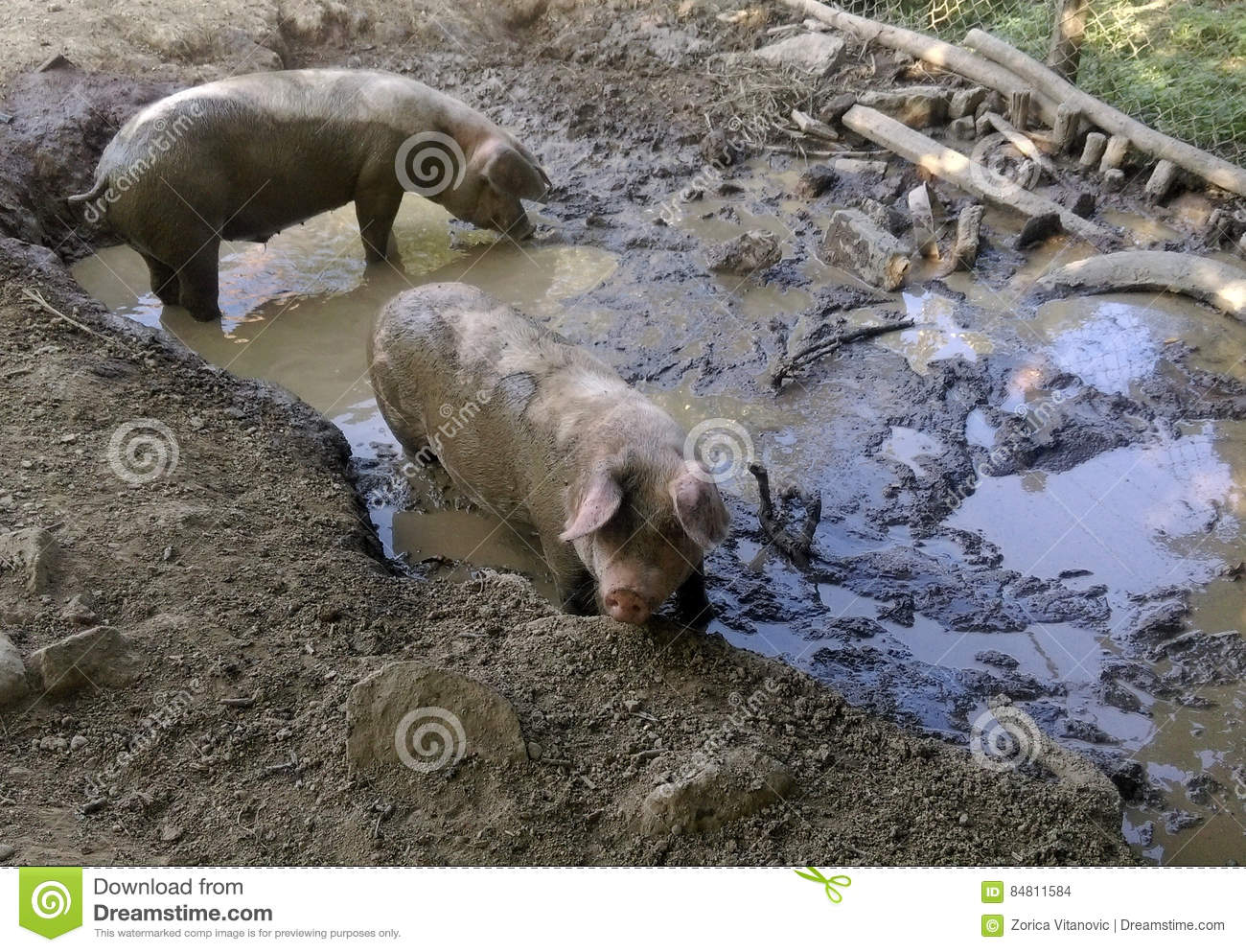 how to draw a pig in mud