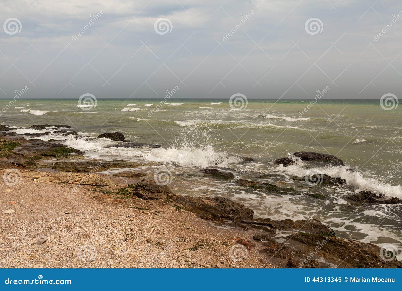 Dirty sea water full of seaweed