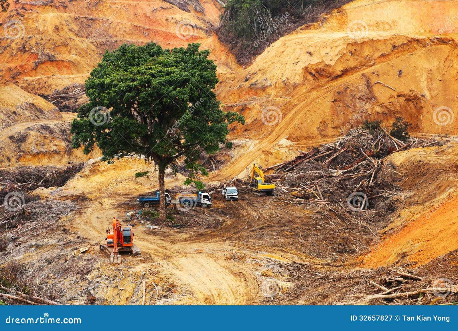 Disboscamento all interno della foresta tropicale