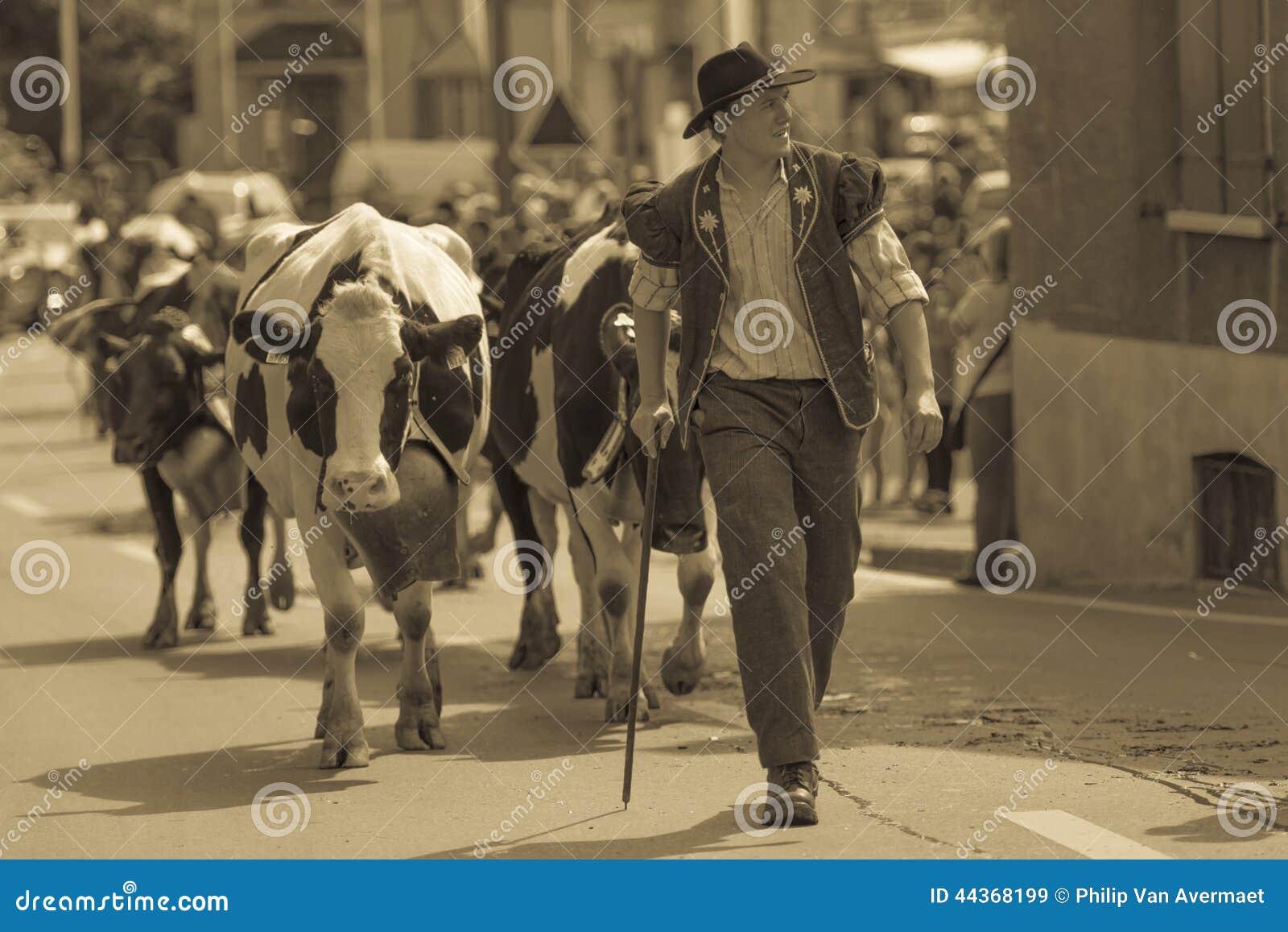 Discesa Blonay Svizzera del bestiame