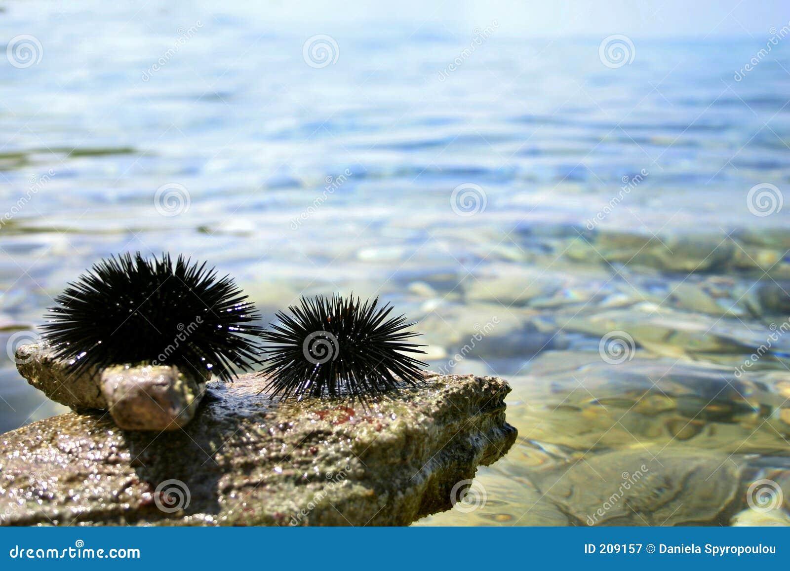 Discoli del Mar Nero