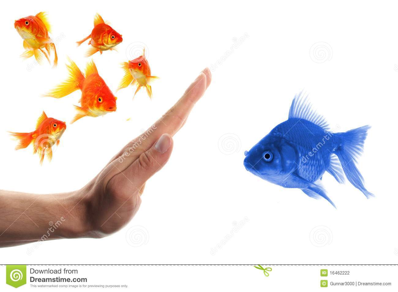 Discriminating outsider racism or intolerance concept with goldfish ...