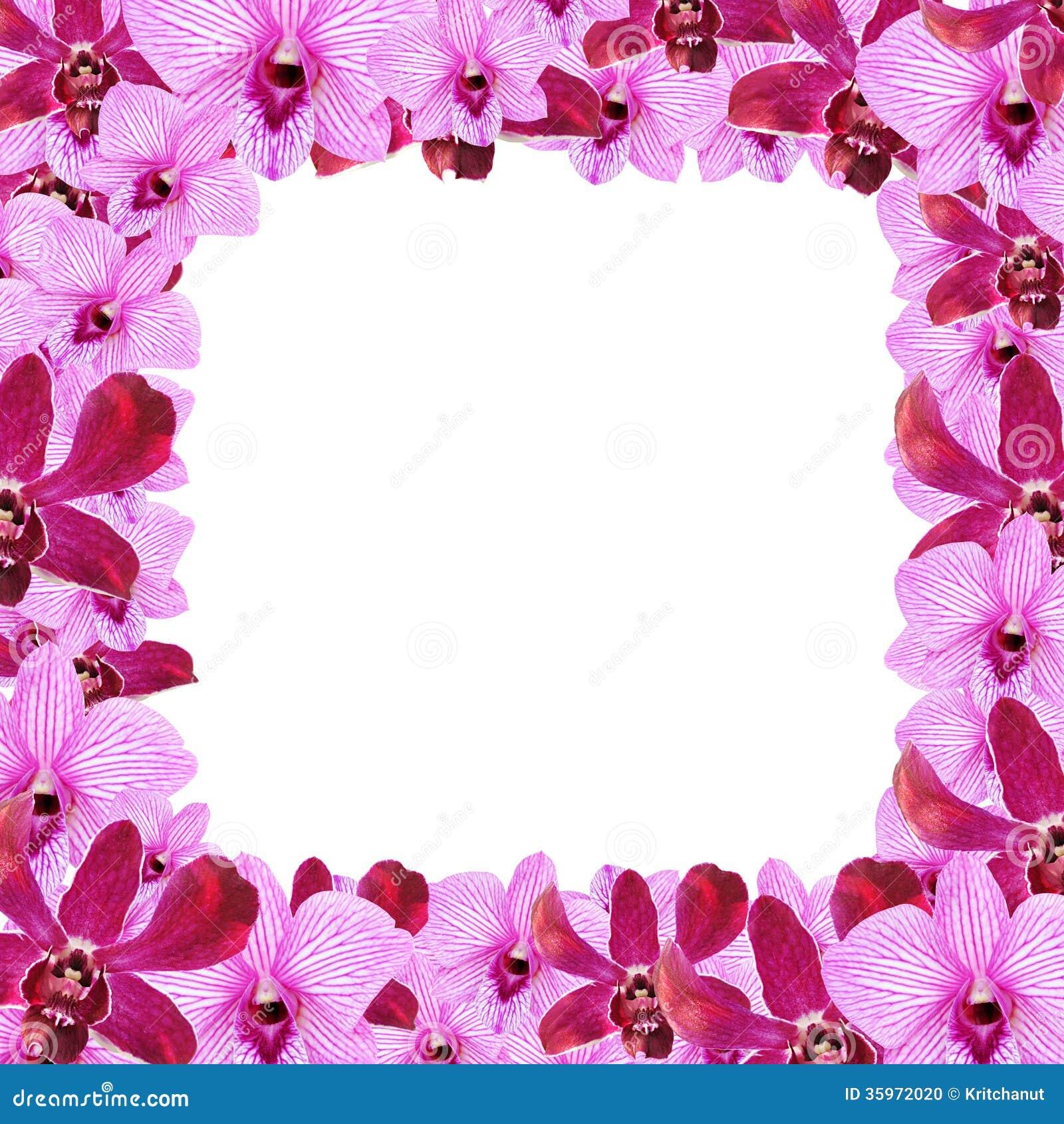 Diseño de la frontera de la flor de la orquídea