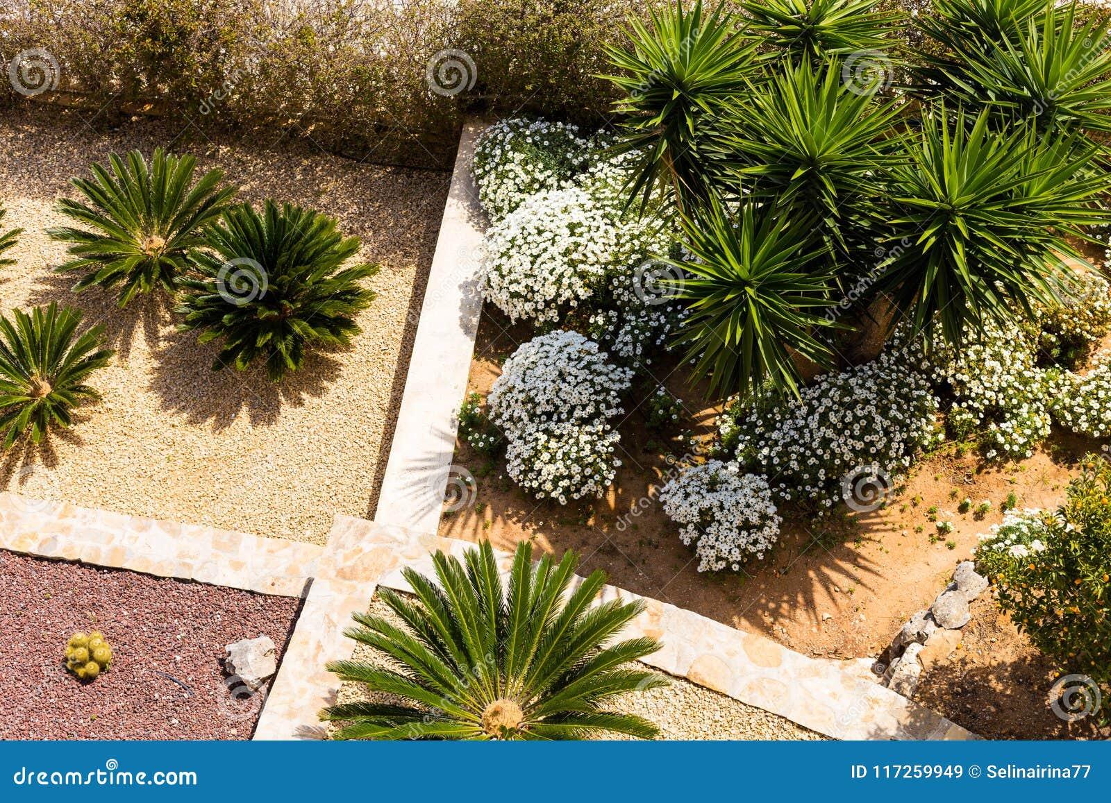 Diseño Del Paisaje Con Las Palmeras Y Las Flores Vista