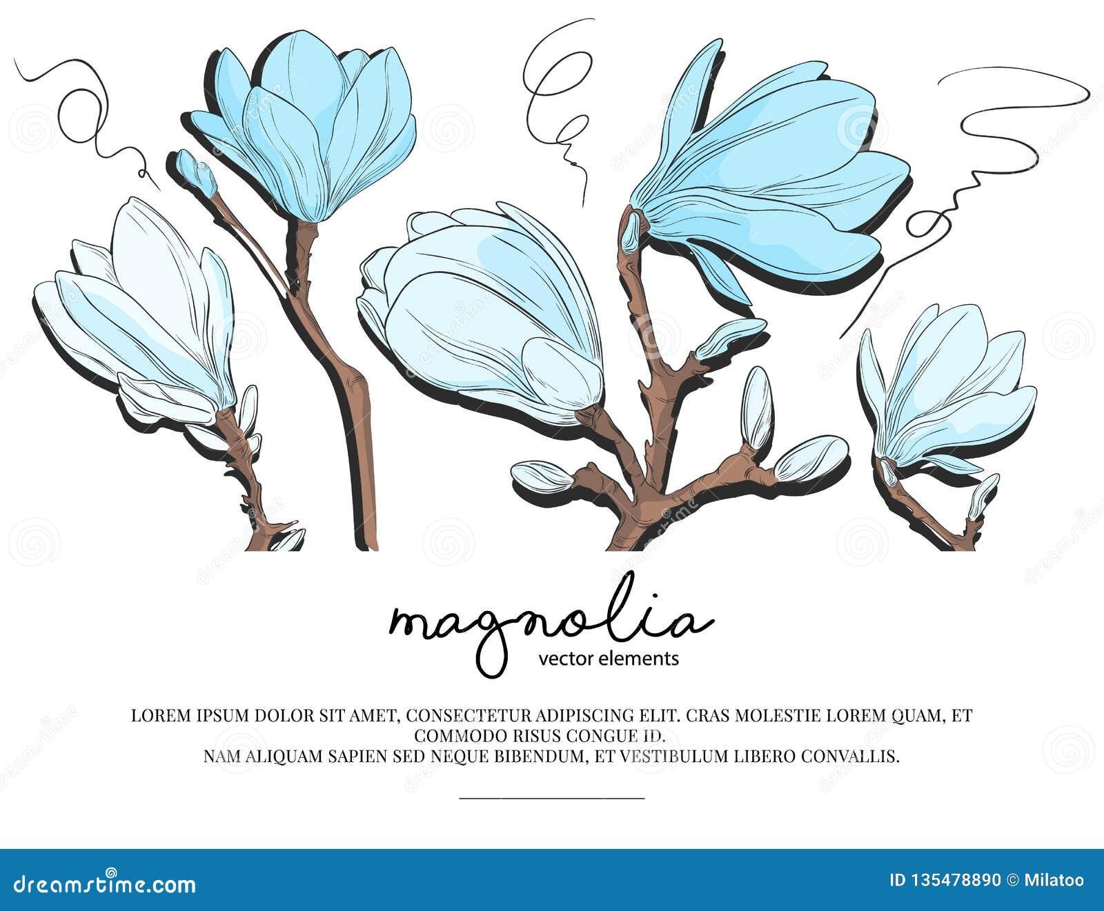 Diseño floral de la plantilla de la tarjeta de la invitación que se casa con las flores blancas y azules de la magnolia Diseño de