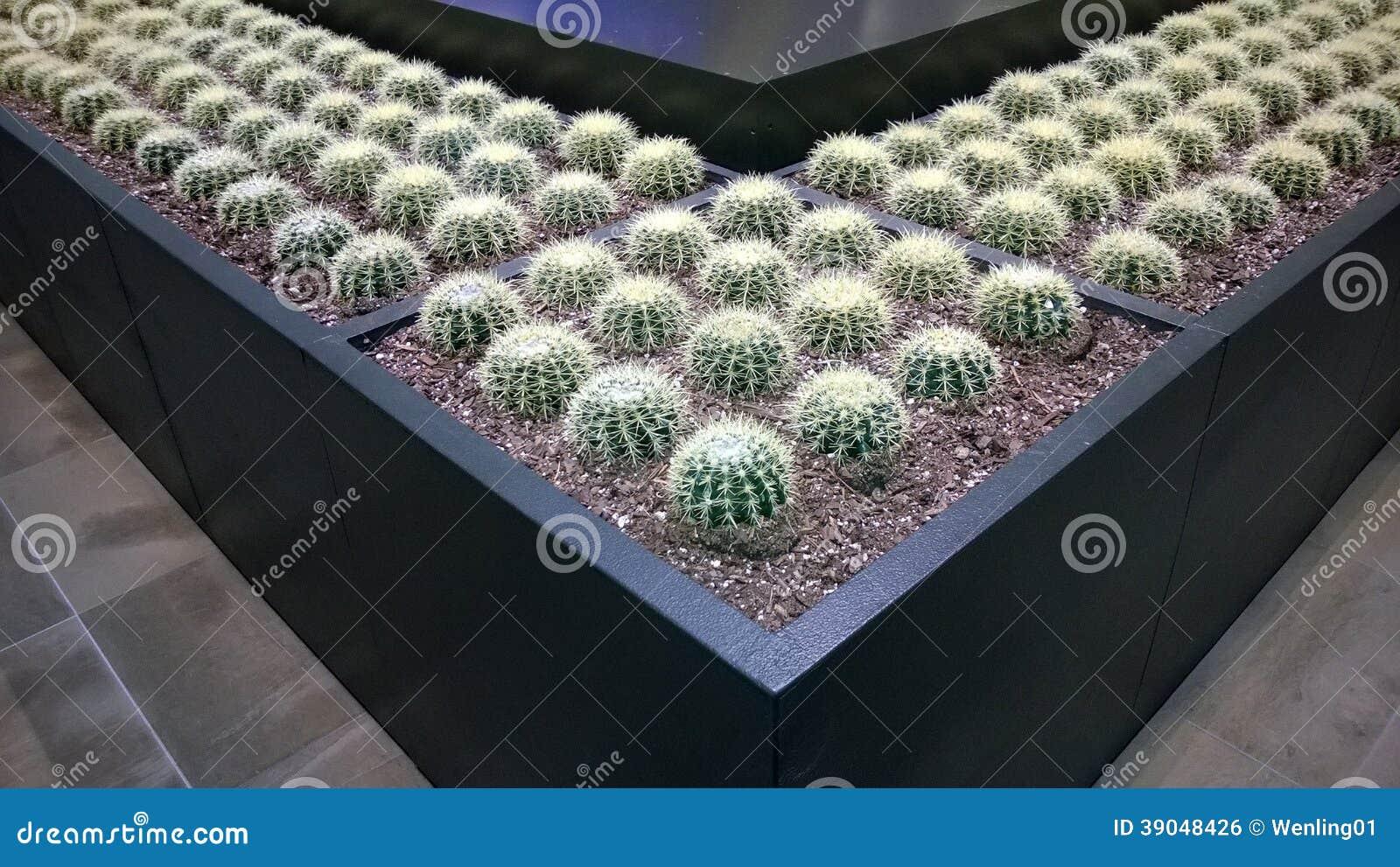 Dise o interior del jard n con el cactus foto de archivo for Diseno jardin interior