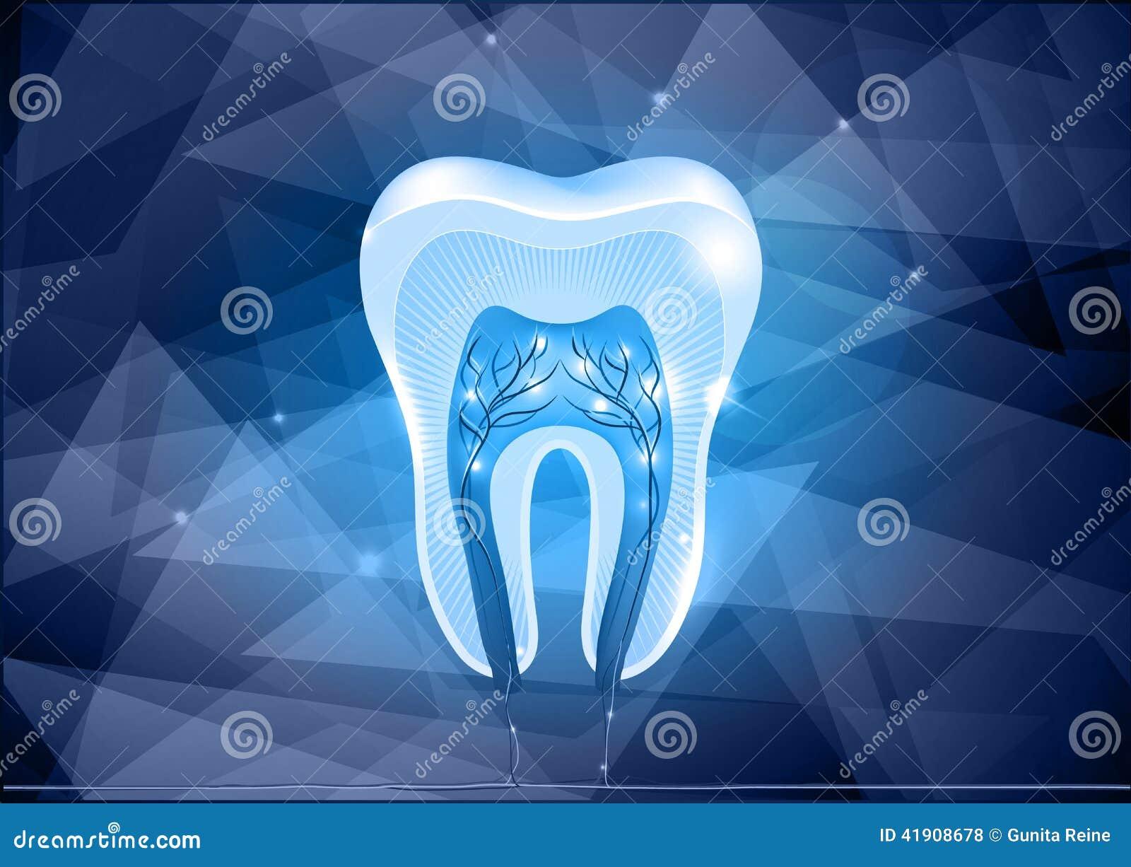 Diseño seccionado transversalmente del diente