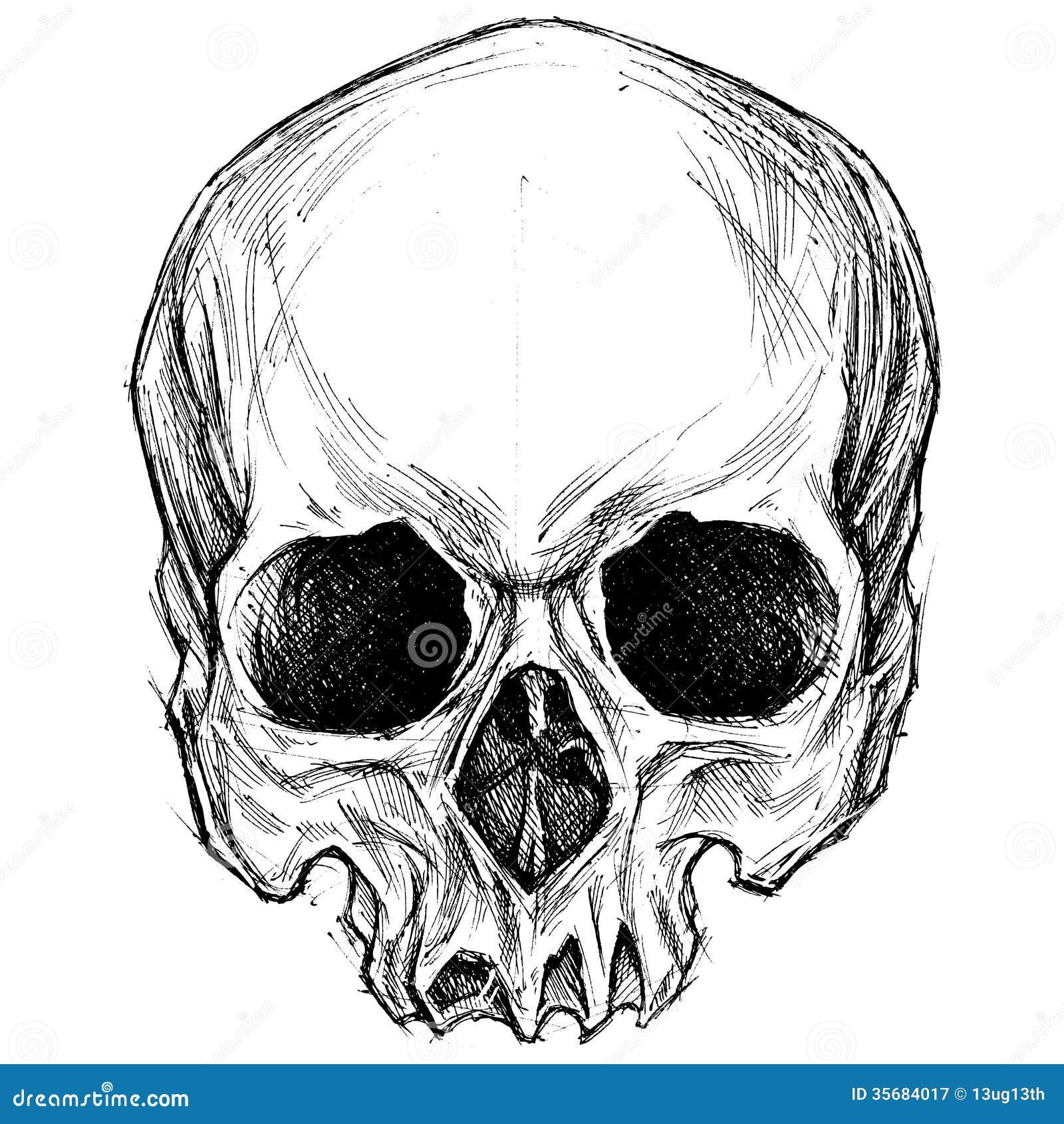 Disegno del cranio