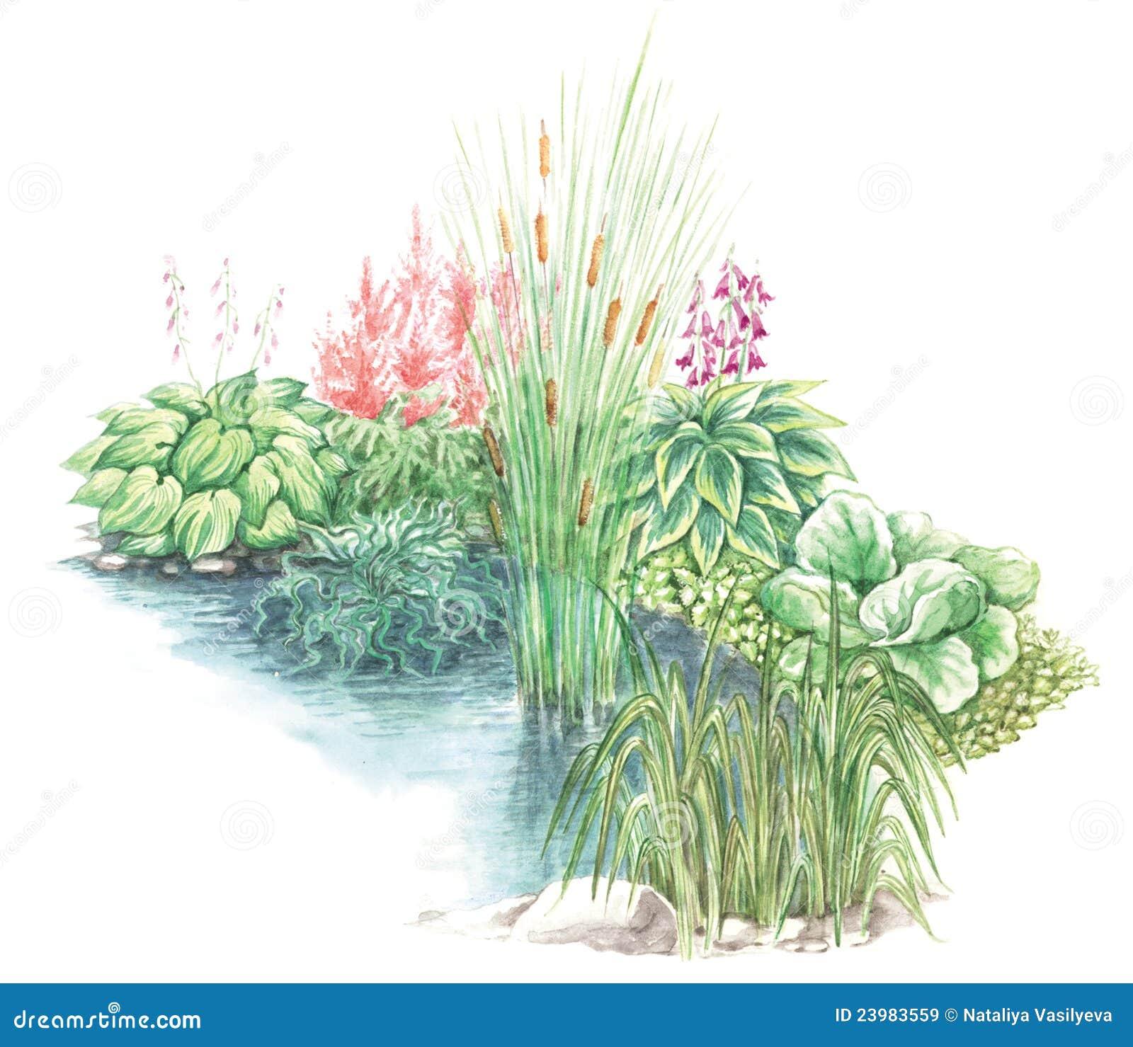 disegno del giardino delle basi fiorite fotografie stock ... - Giardino Fiorito Disegno