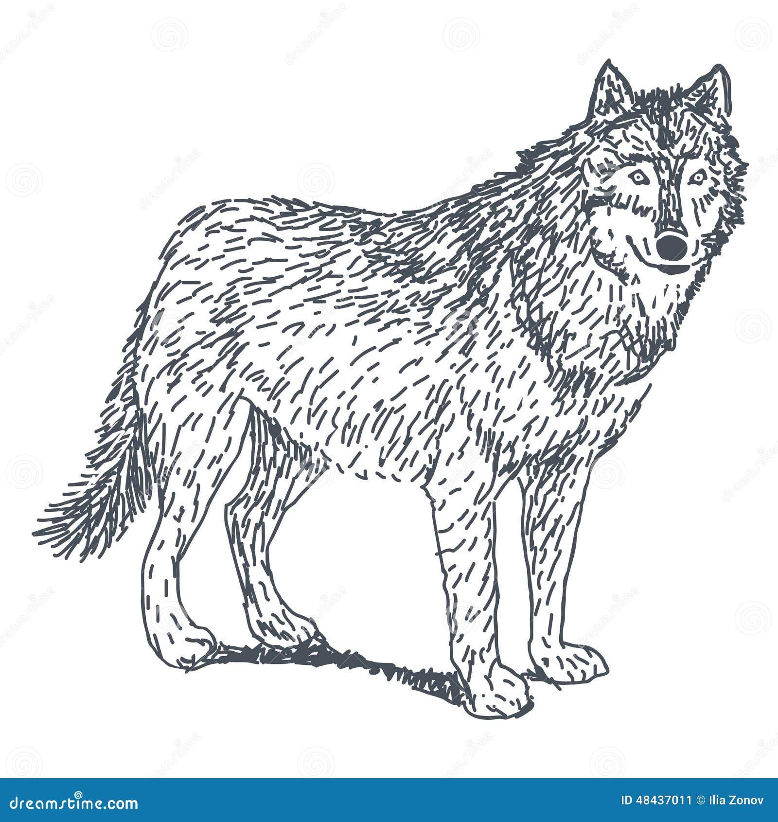 Disegno del lupo illustrazione vettoriale illustrazione for Disegni di lupi facili