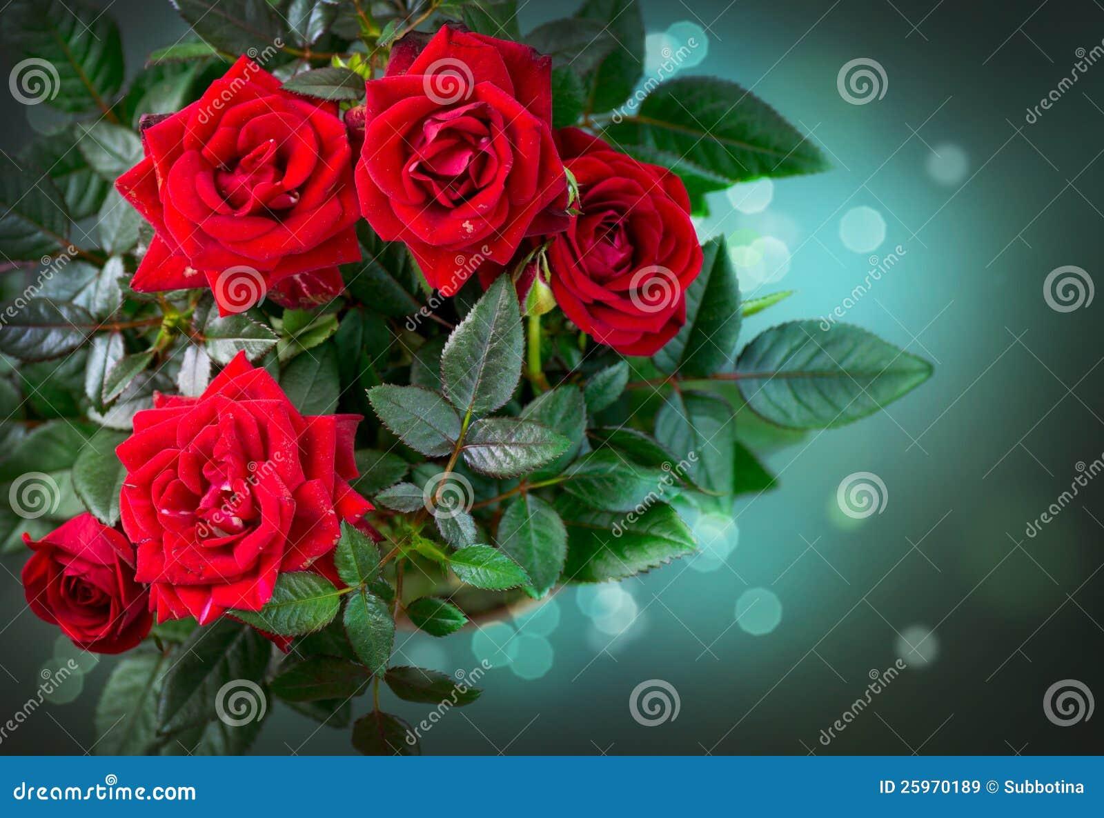 Disegno del mazzo delle rose immagine stock immagine for Disegni del mazzo del cortile