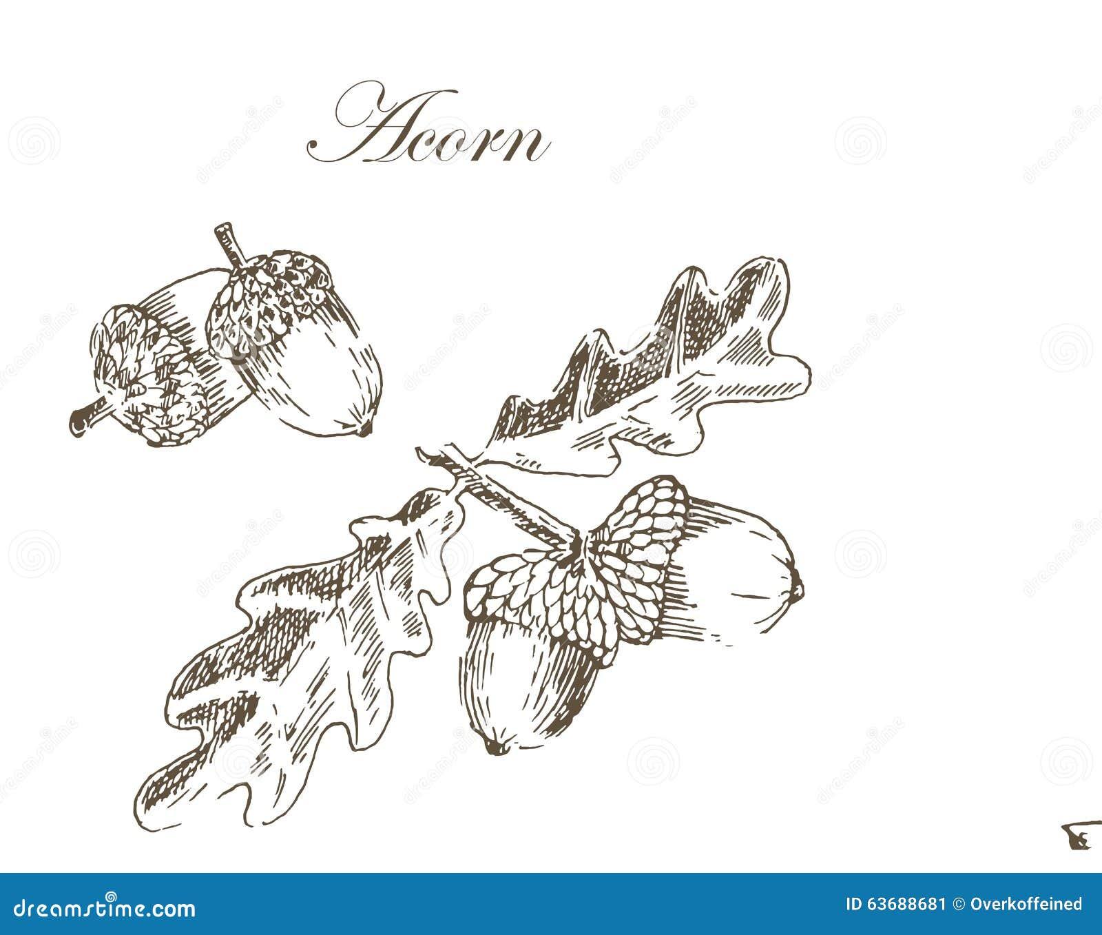 disegno di schizzo dell inchiostro di vettore delle