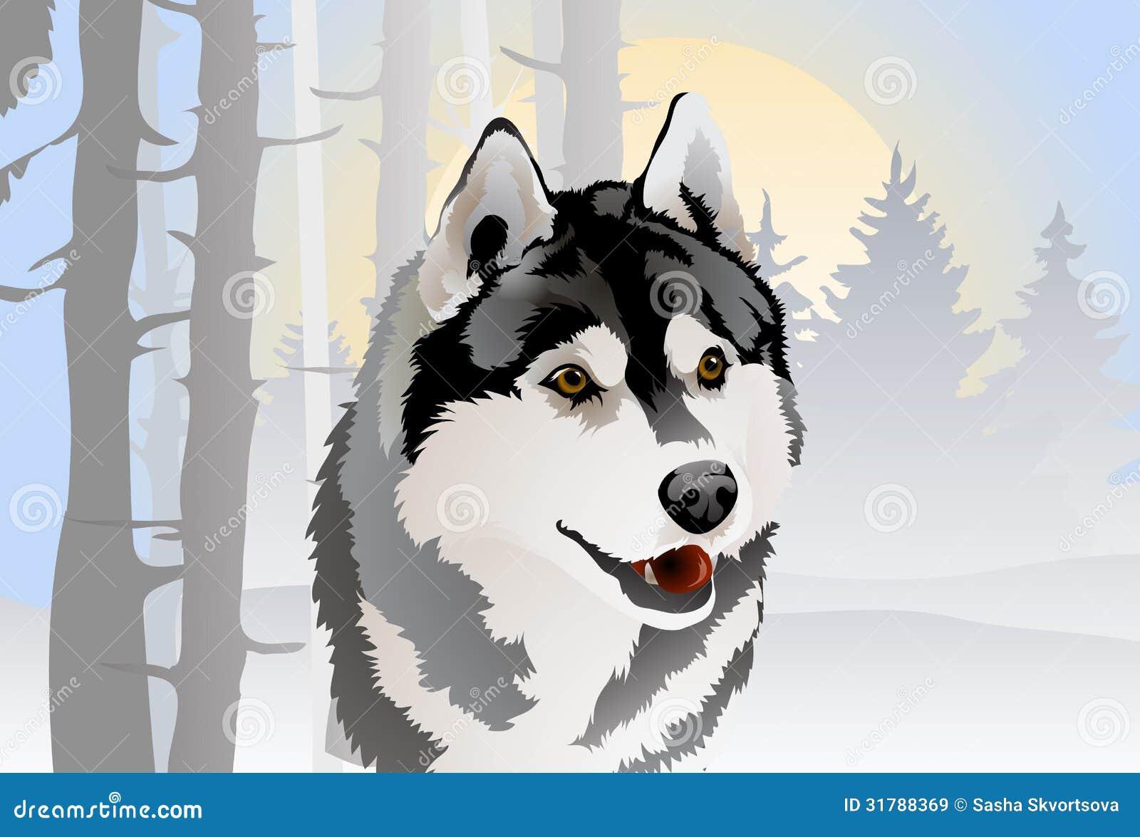 Disegno di vettore del husky siberiano della razza del - Animali in inverno clipart ...