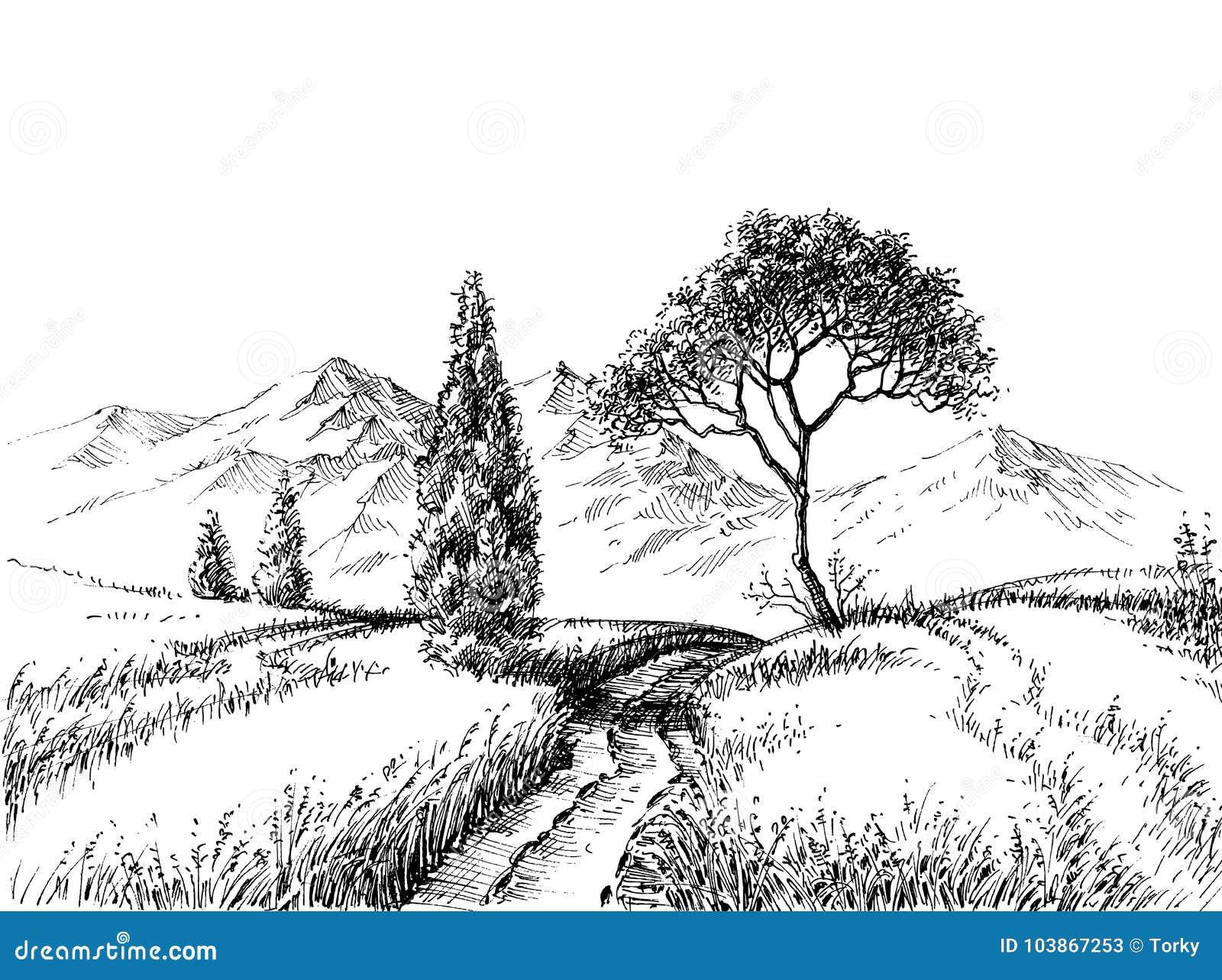 Disegno A Matita Del Paesaggio Del Campo Illustrazione Vettoriale