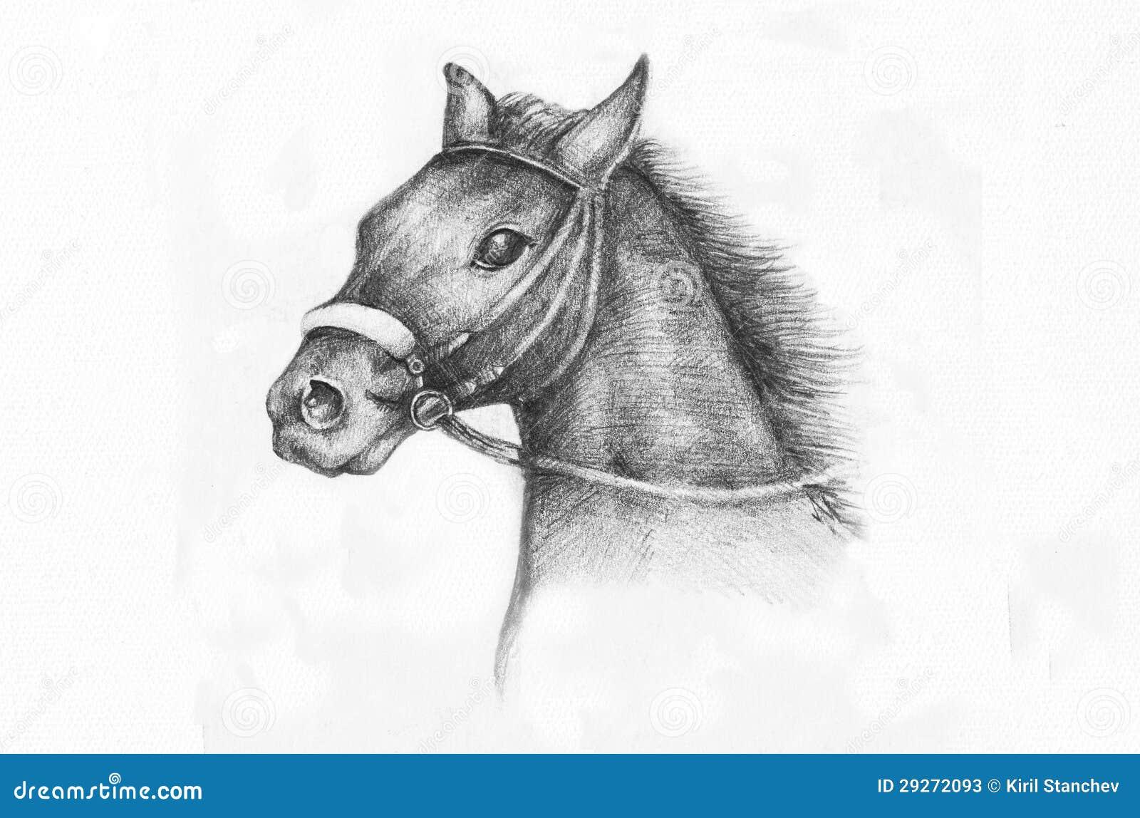 Disegno a matita di un cavallo illustrazione di stock for Disegni di cavalli a matita
