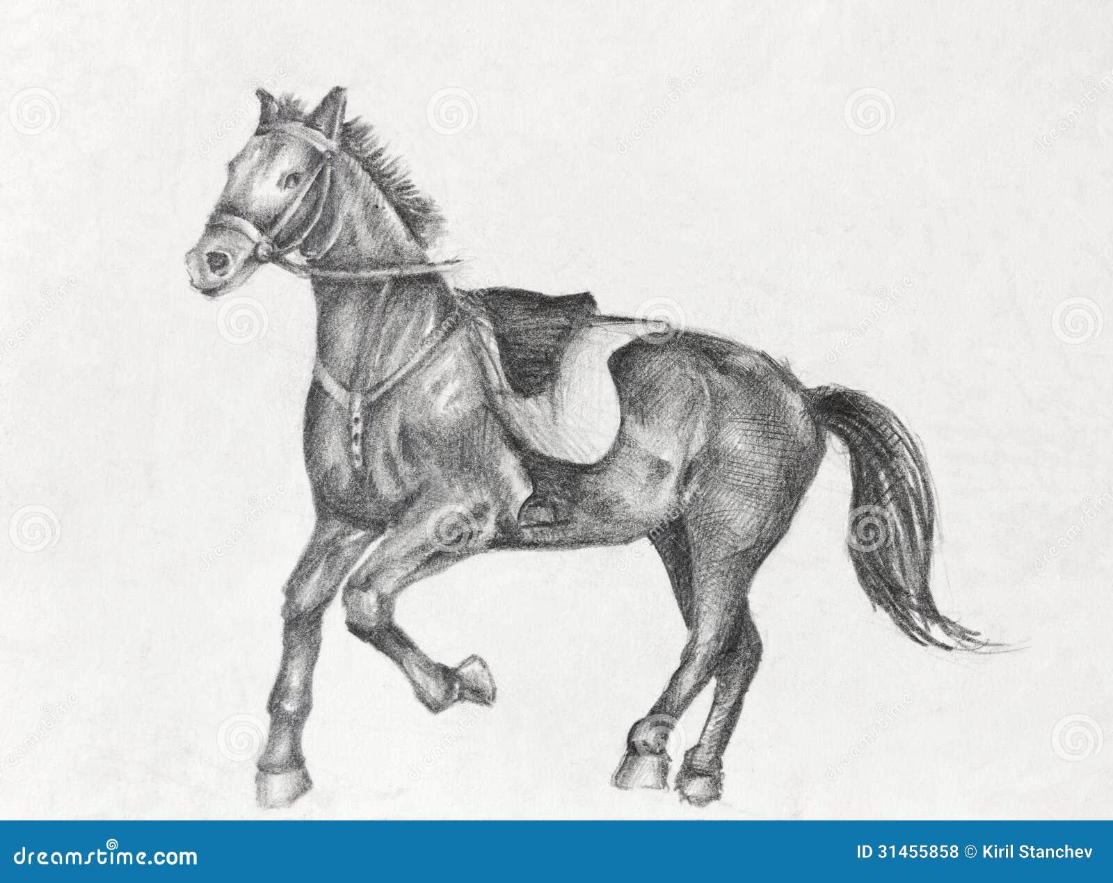 Favoloso Disegno A Matita Di Un Cavallo Corrente Illustrazione di Stock  AK99
