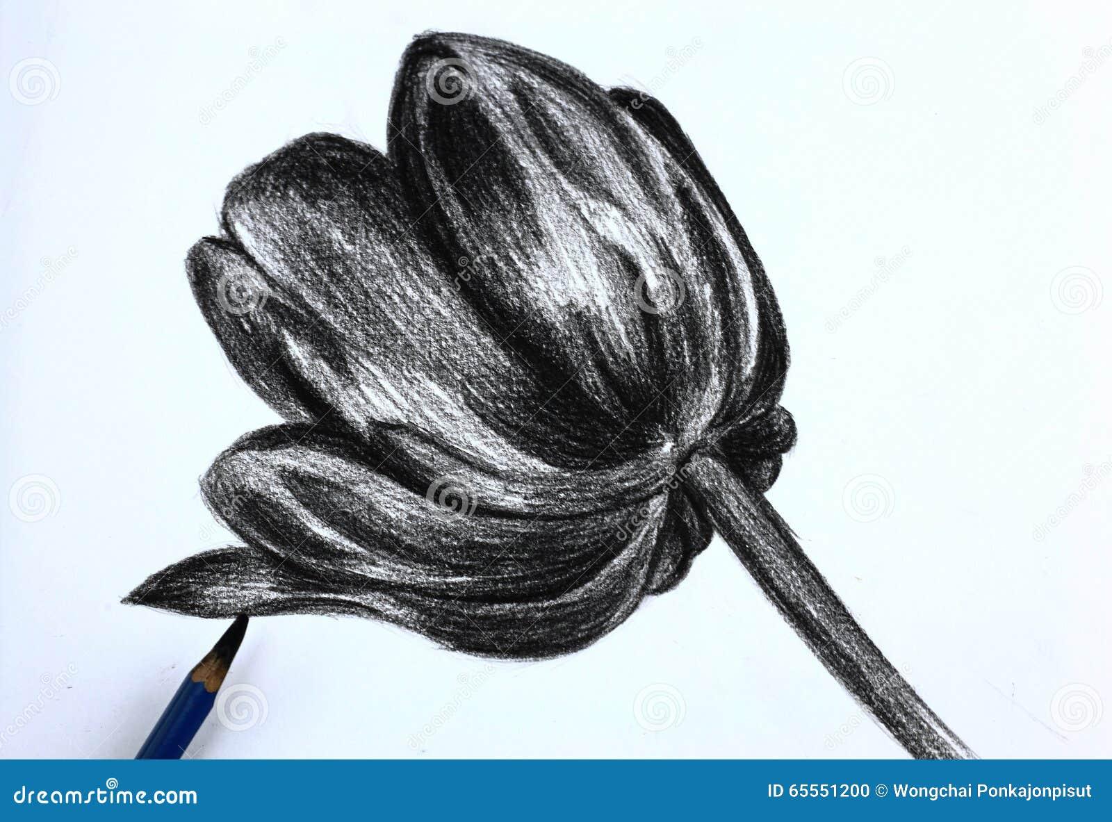 Disegno A Matita I Dei Fiori Fotografia Stock Immagine Di Nostro