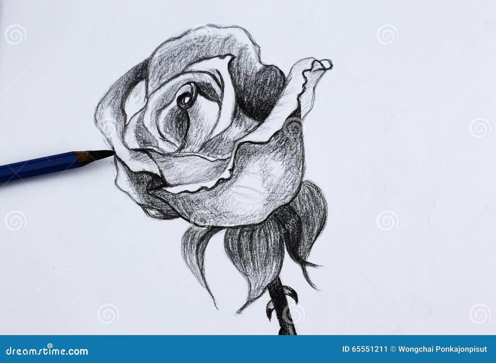 Disegno a matita i dei fiori immagine stock immagine for Disegni e piani di coperta