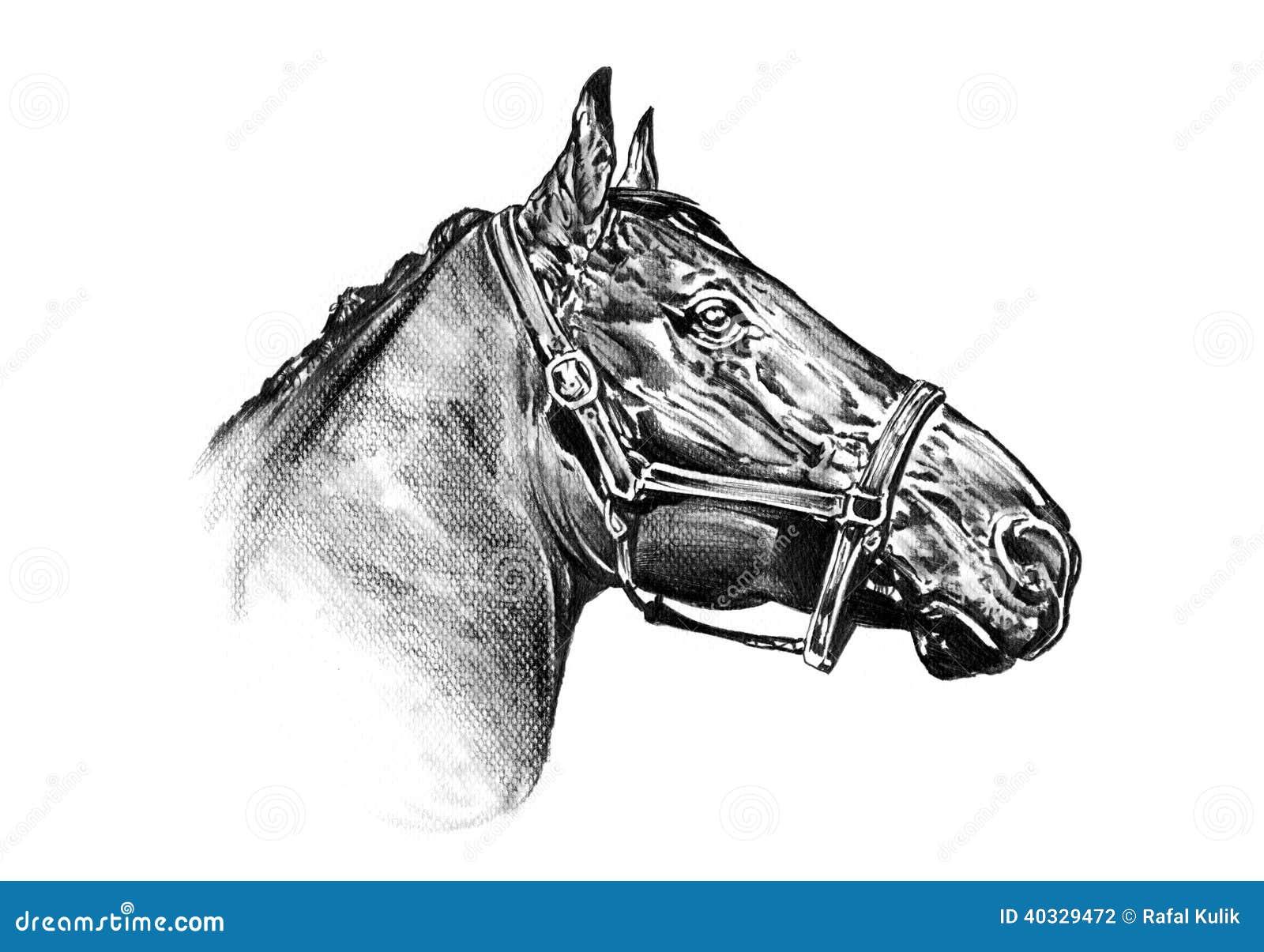 Disegno a matita a mano libera della testa di cavallo for Disegno cavallo stilizzato