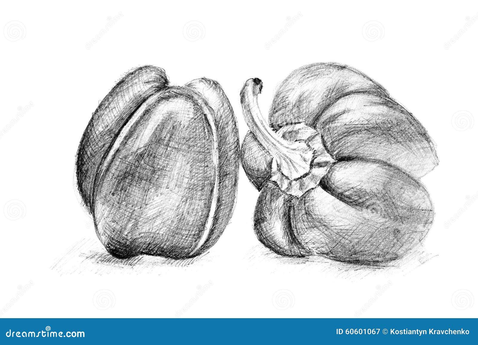 Disegno A Matita Originale Dal Pepe Illustrazione Di Stock