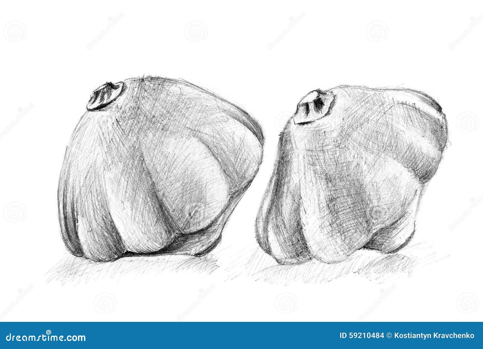 Disegno A Matita Originale Dalla Zucca Del Cespuglio Illustrazione