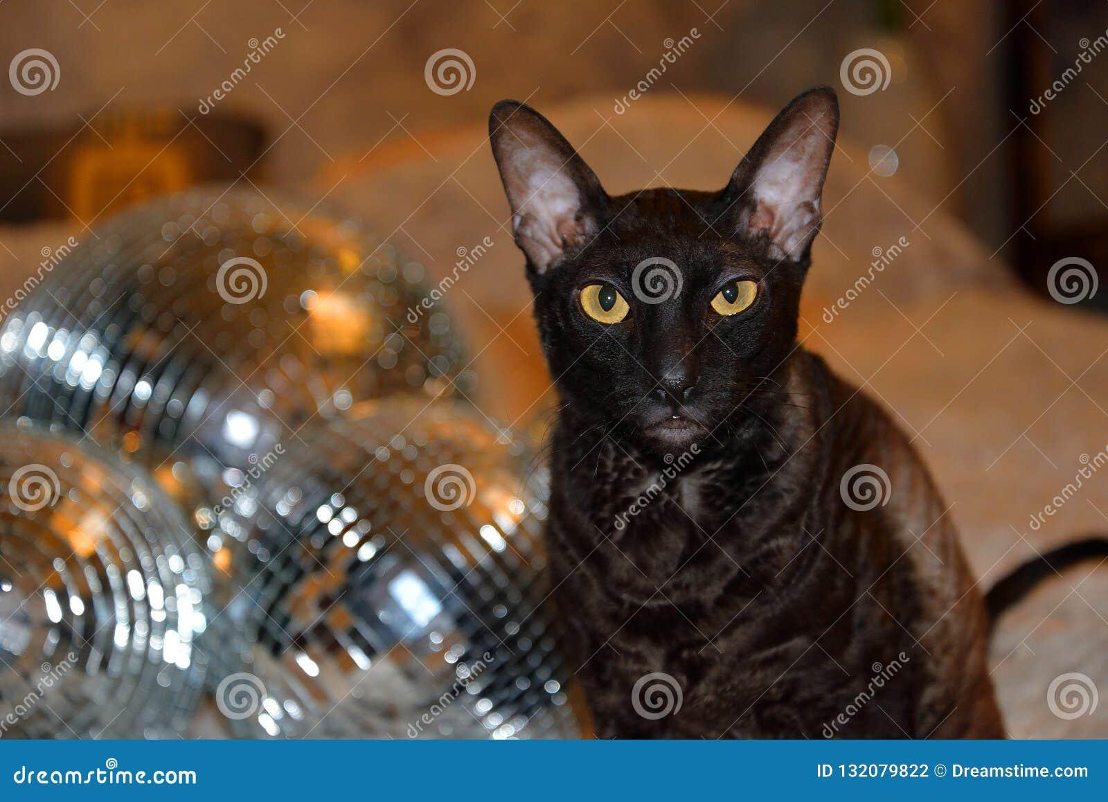 Diskospegeln klumpa ihop sig med en charmig katt