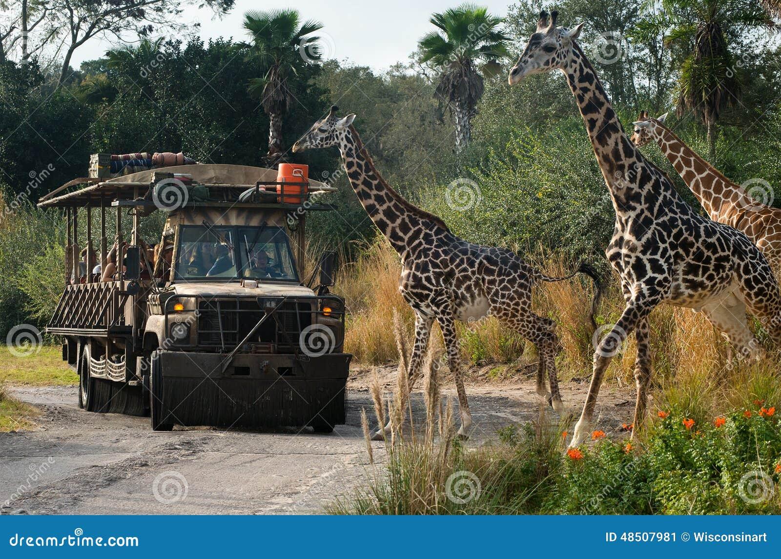 Disney värld Kilimanjaro Safari Animal Kindom