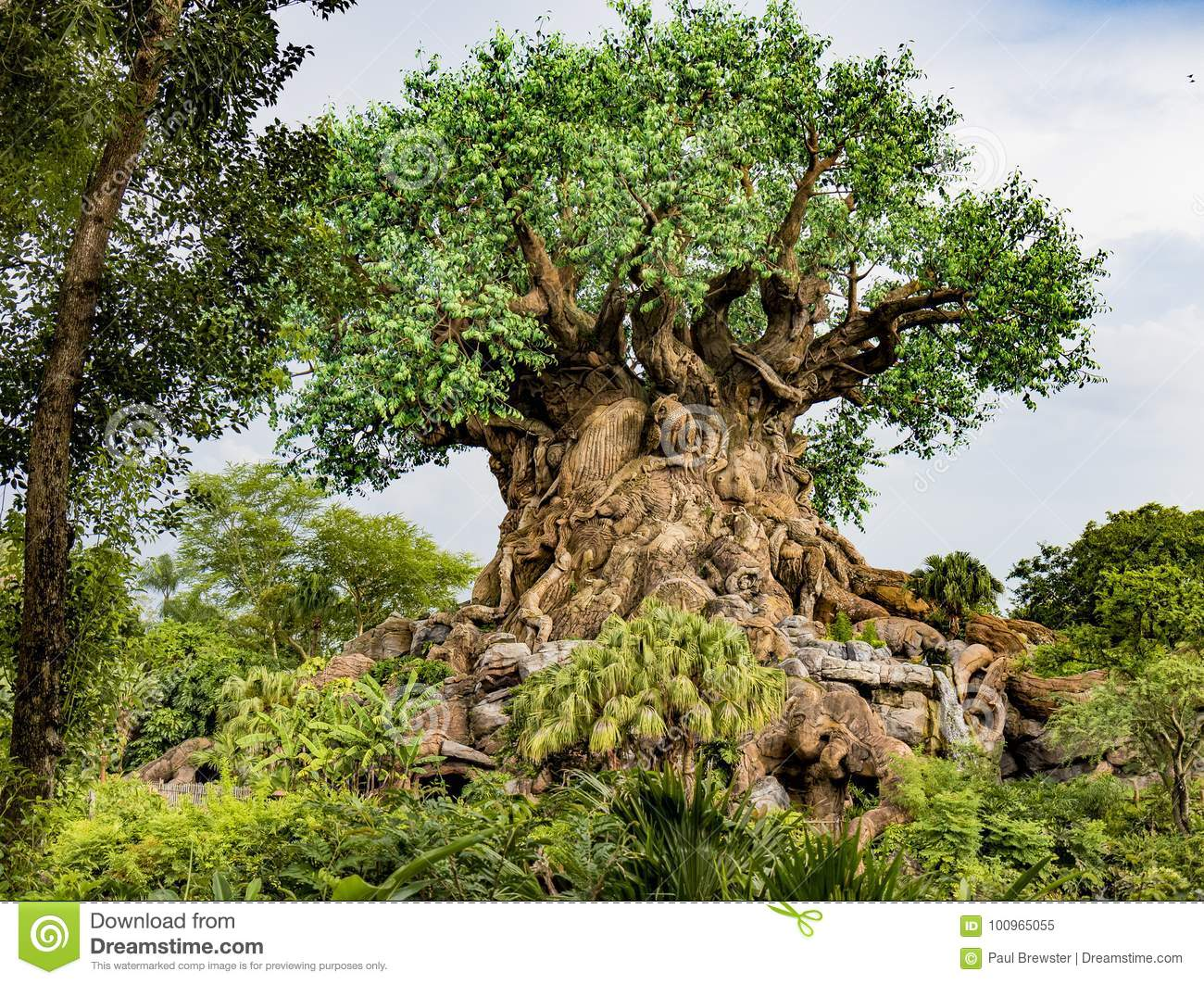 Disney World Orlando Florida Animal Kingdom Tree Of Life Editorial