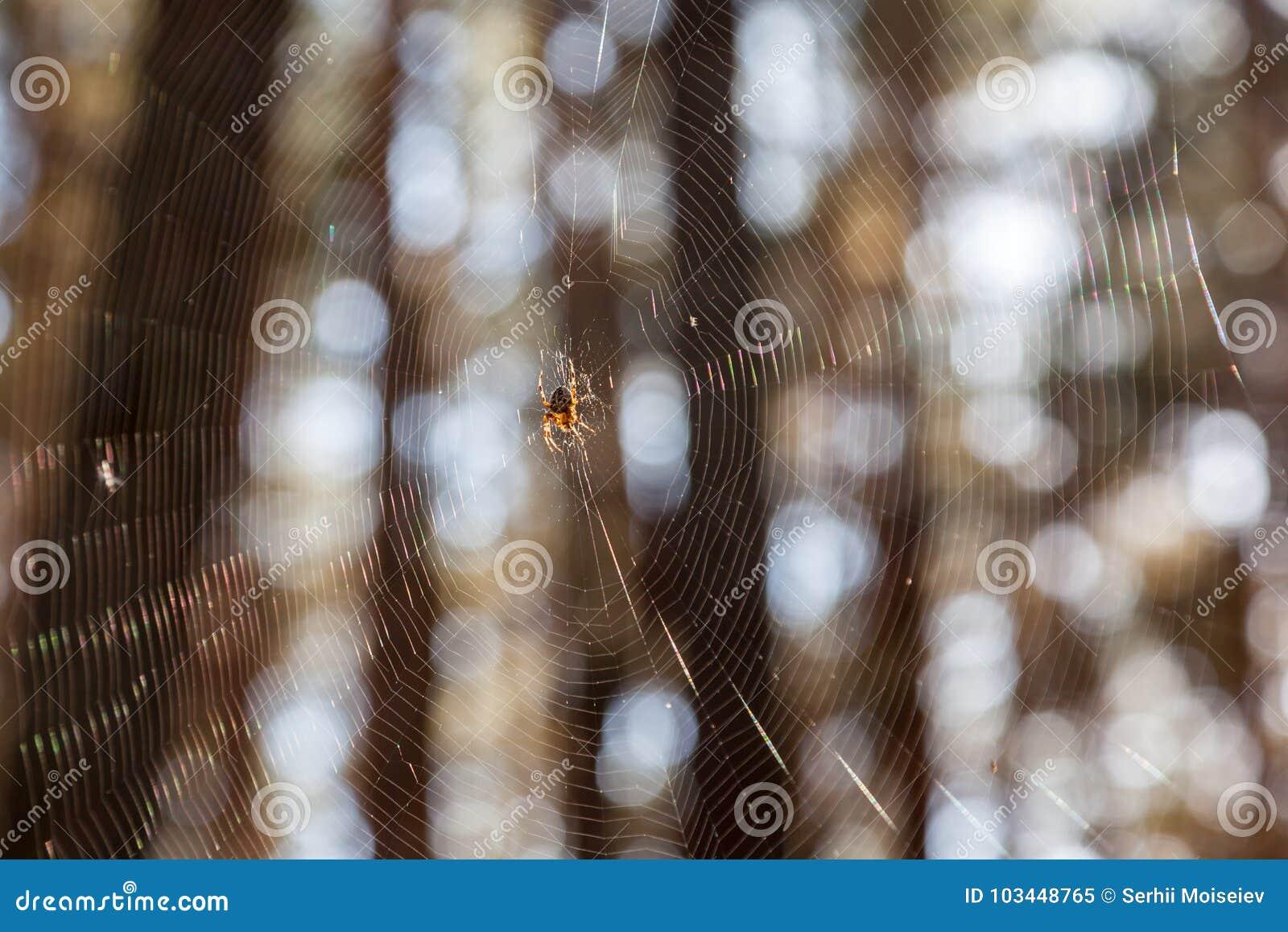 Dispersión de la luz del sol por la telaraña