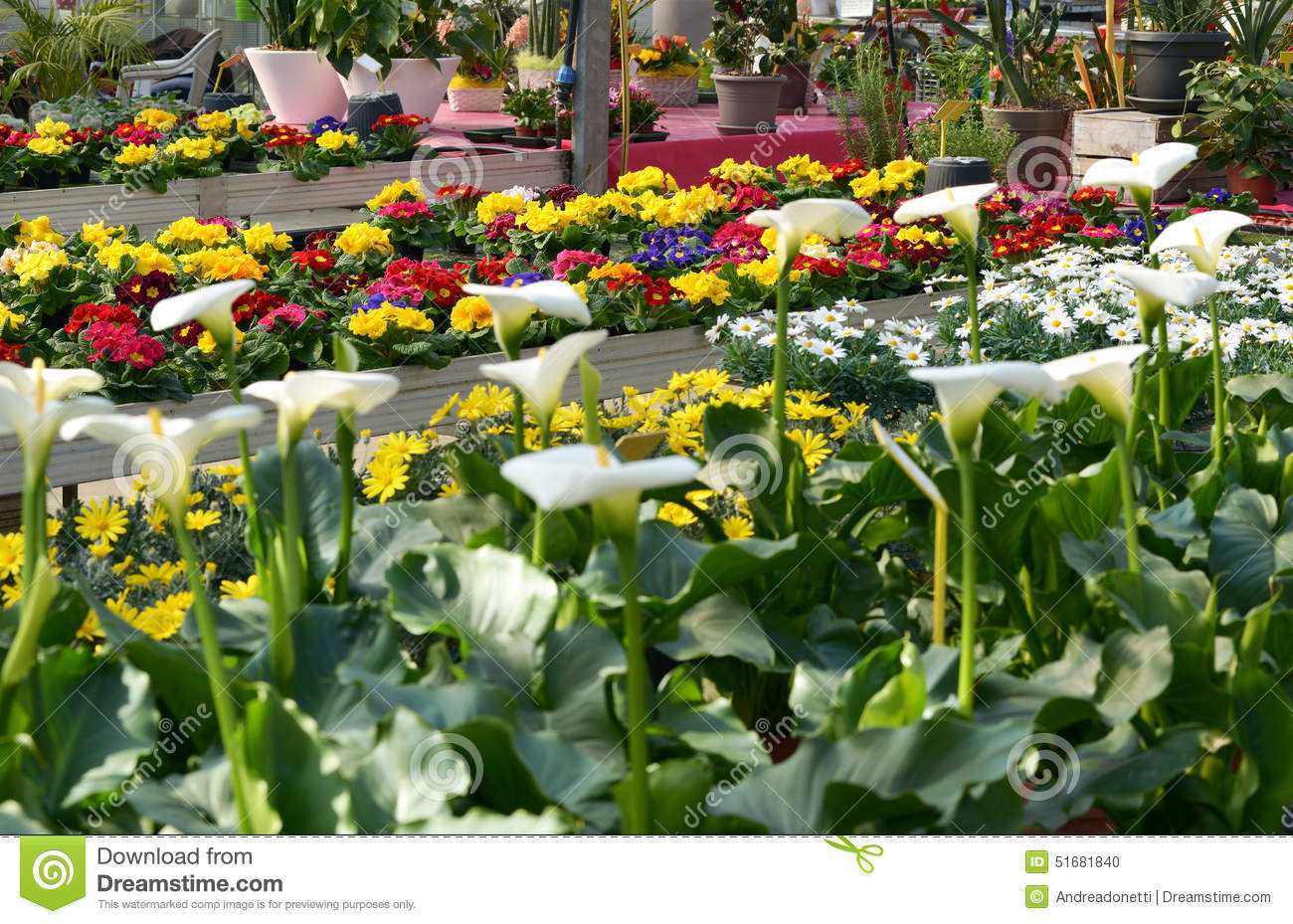 Display Or Colorful Flowers In A Flower Shop Stock Photo Image Of