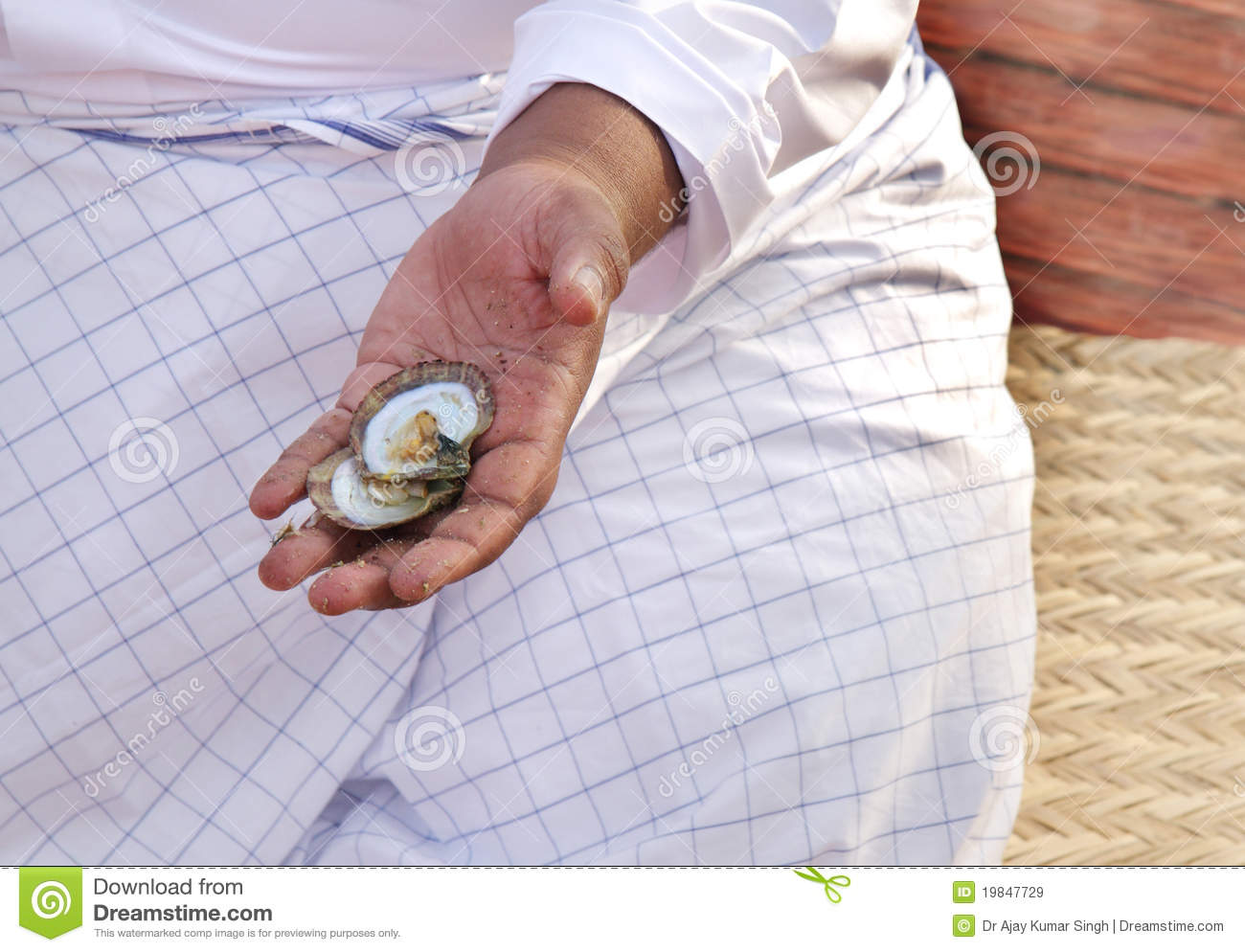 Display Of Pearl Oyster By Expert Royalty Free Stock