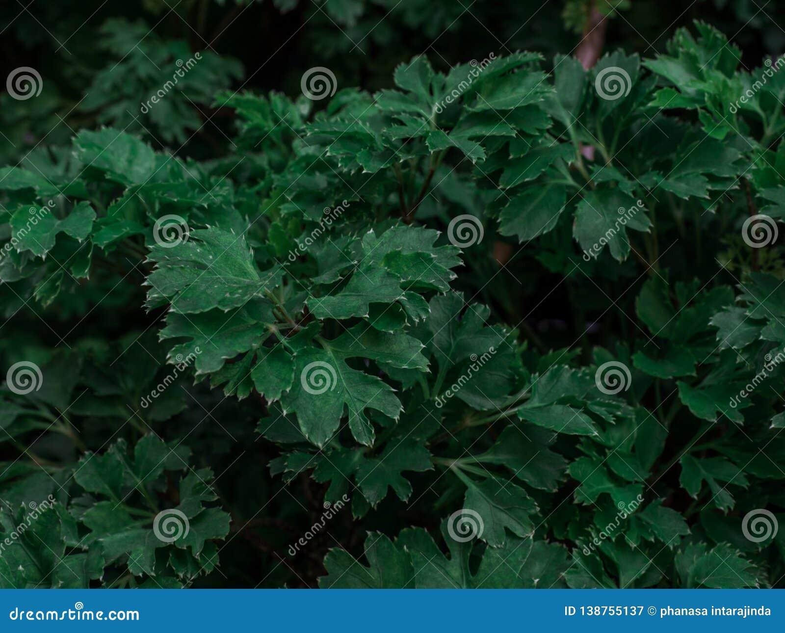 Disposición creativa de la naturaleza con el modelo verde entonado oscuro de las hojas El fondo compone para la moda, belleza, ca