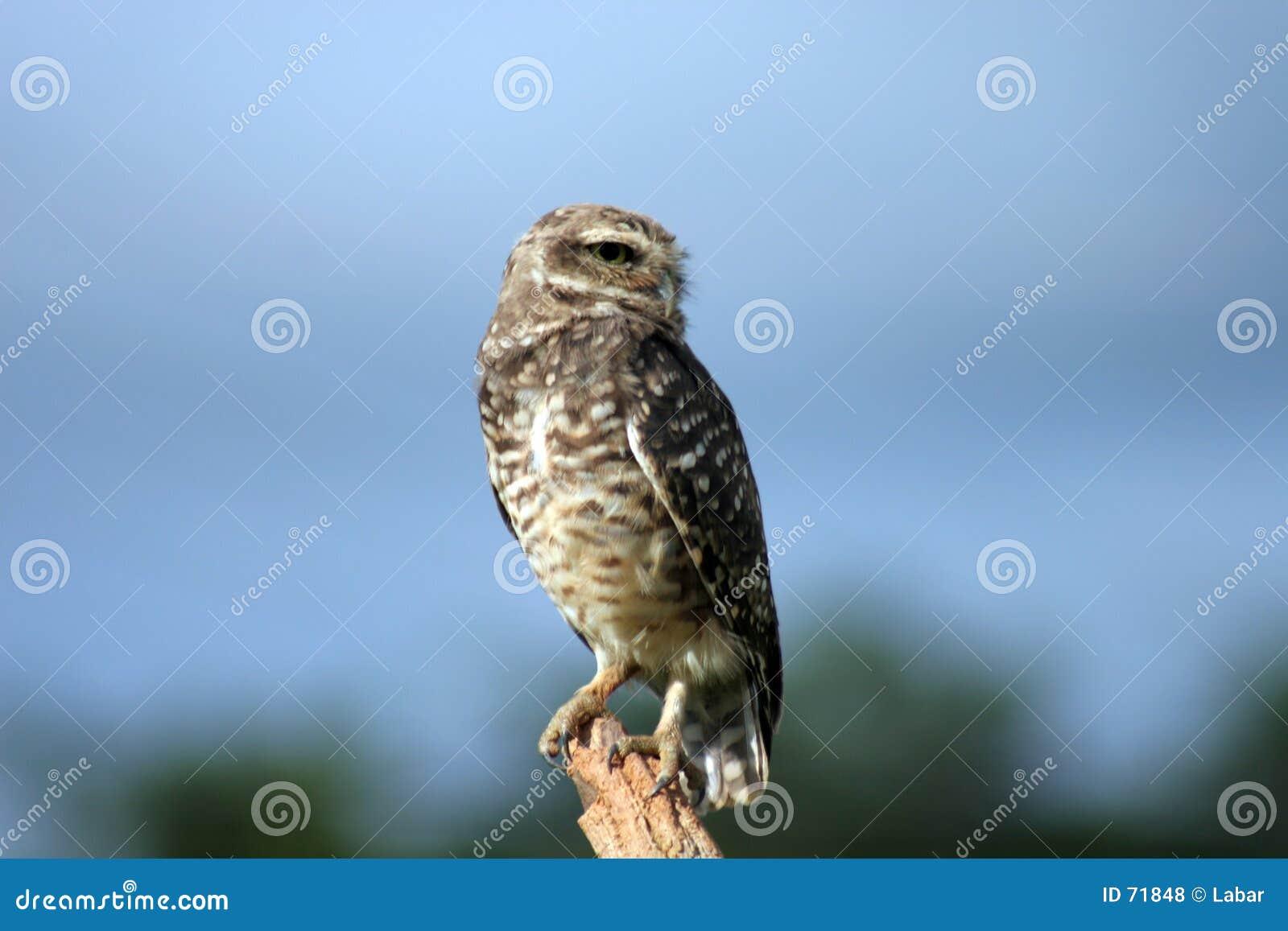 Dispositif protecteur d Owl_On