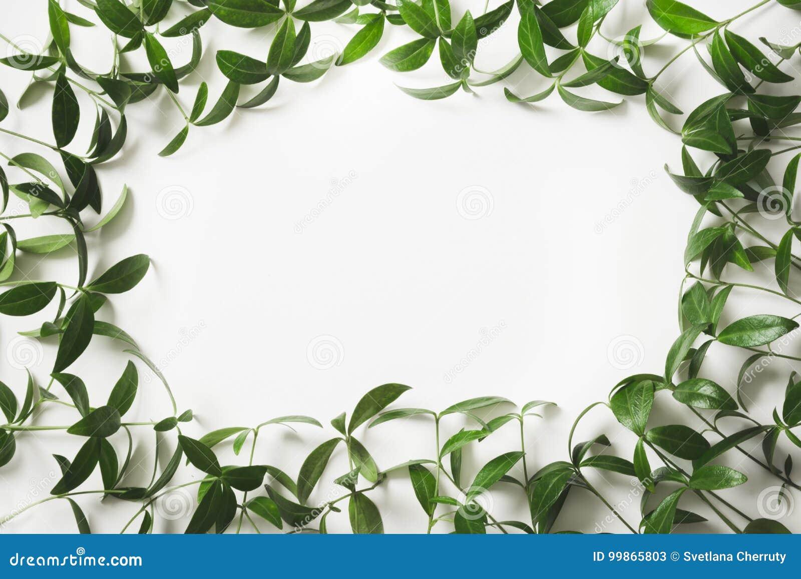 Disposizione creativa fatta delle foglie verdi con lo spazio in bianco vuoto per la nota su fondo bianco Vista superiore