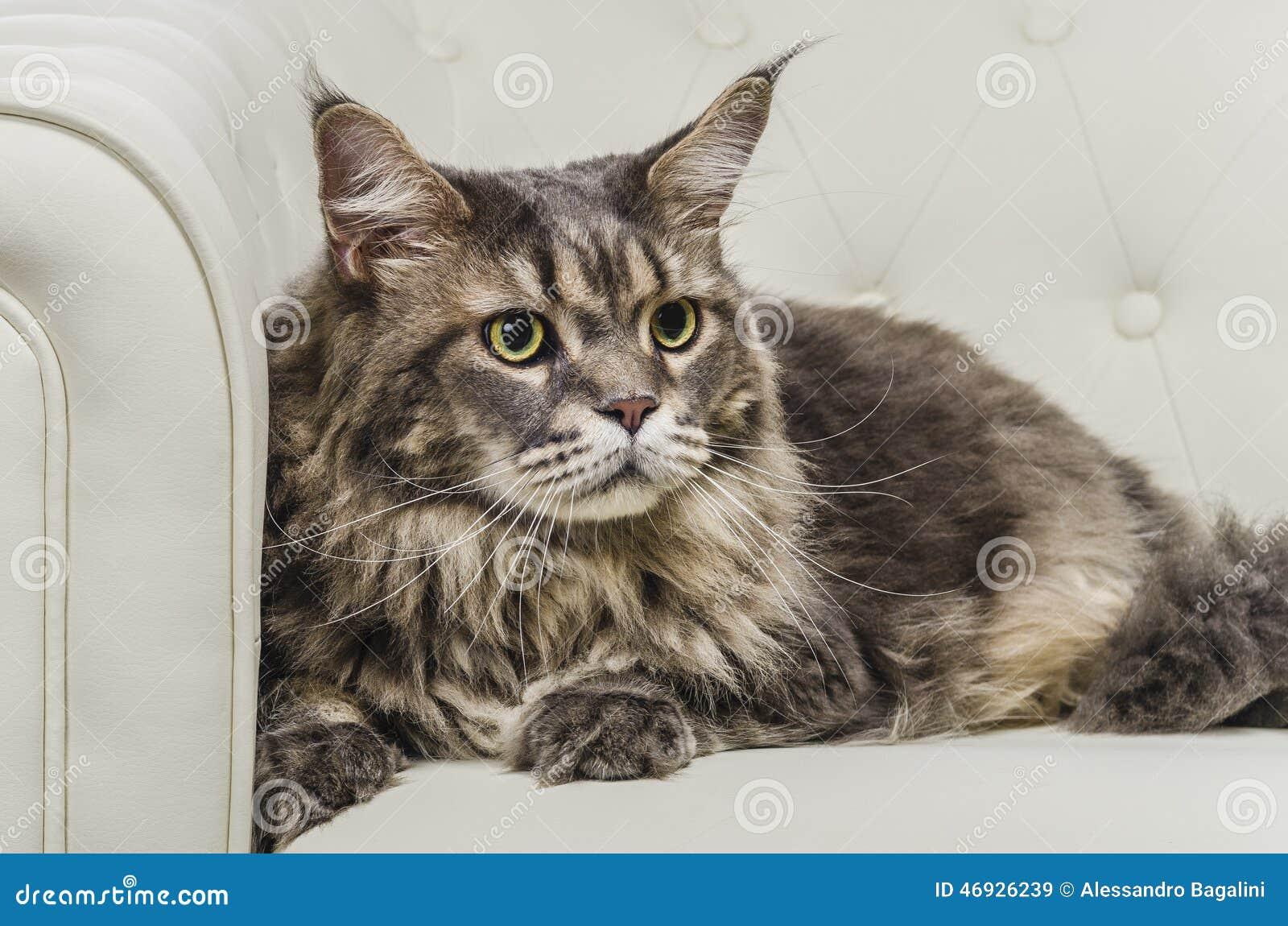Mancunian Cat Pictures