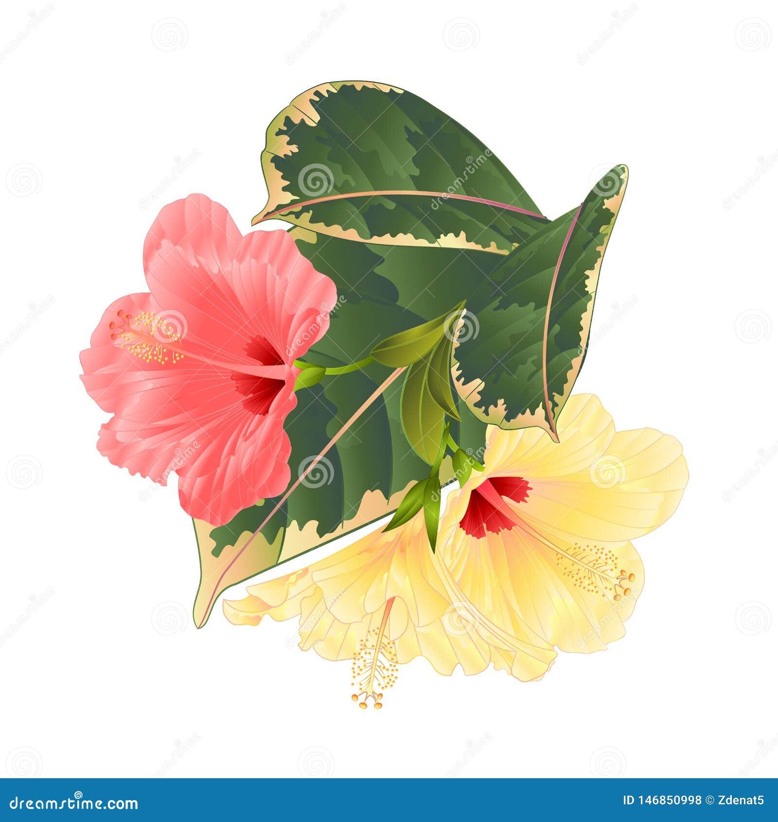 Disposizione floreale dei fiori tropicali, con il rosa ed ibisco e ficus gialli su un illustrazione d annata di vettore del fondo