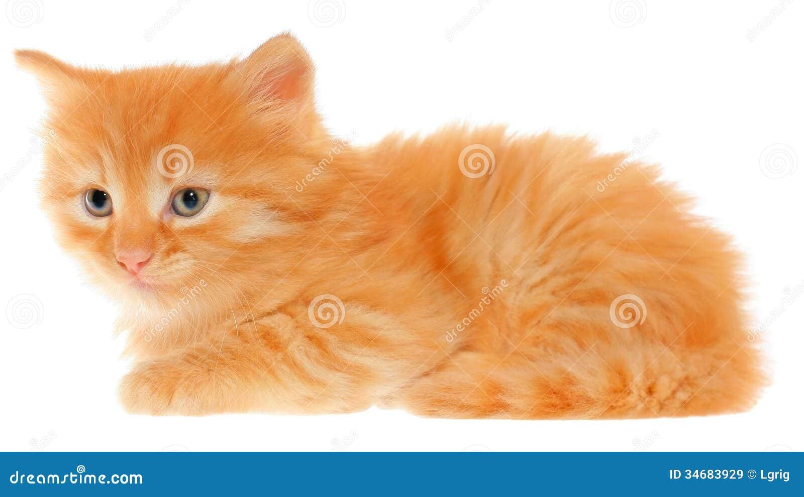 Disposizioni arancio del gattino