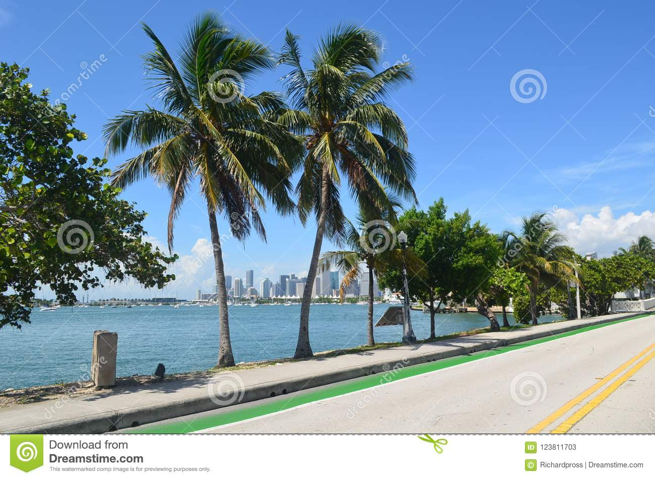 Royal Palm Trees Framing A Distant Miami Skyline Stock Image - Image ...