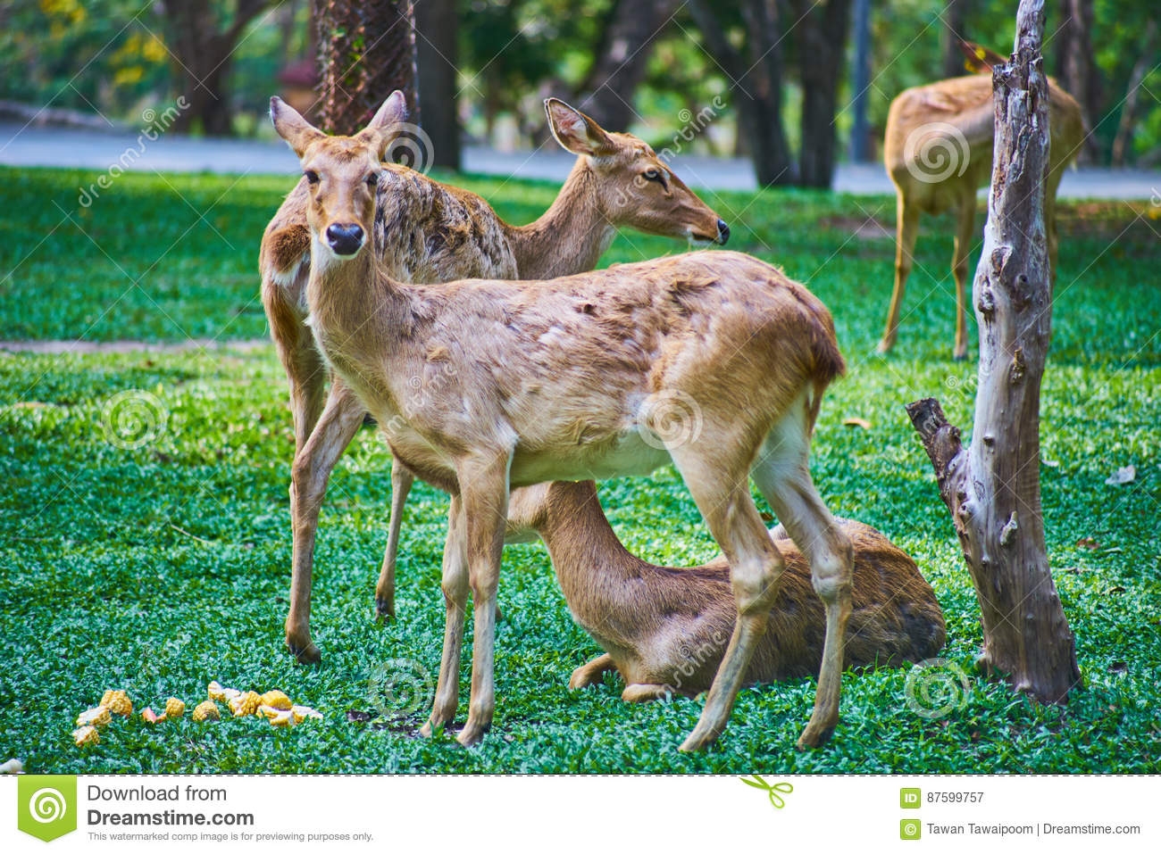 Dit beeld is over Thaise antilope, Bangkok Thailand