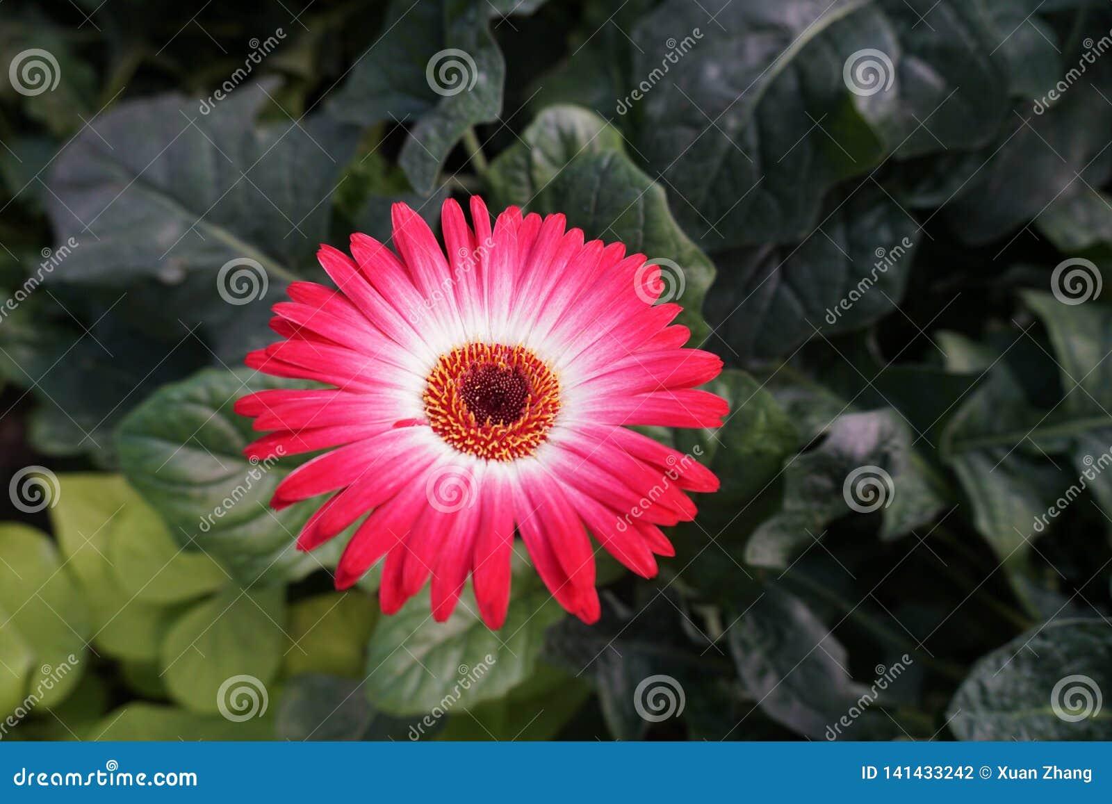 Dit is een bloem in het park