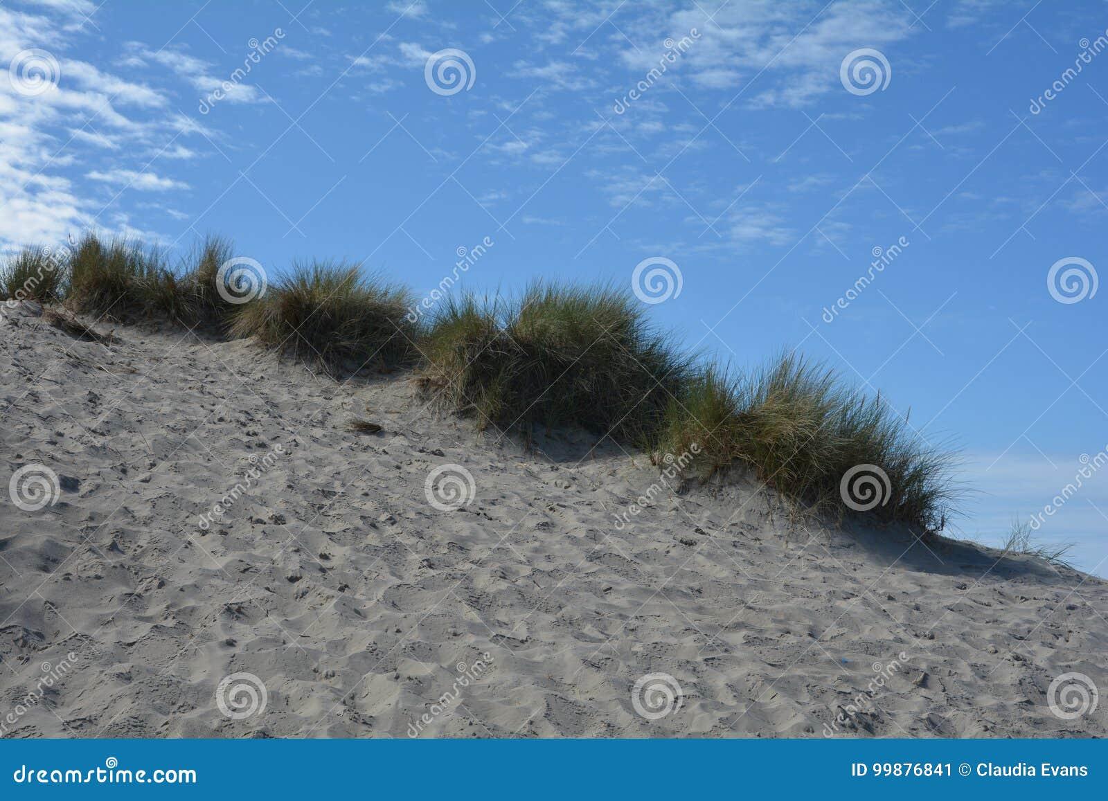 Diuny trawa na Północnego morza plaży
