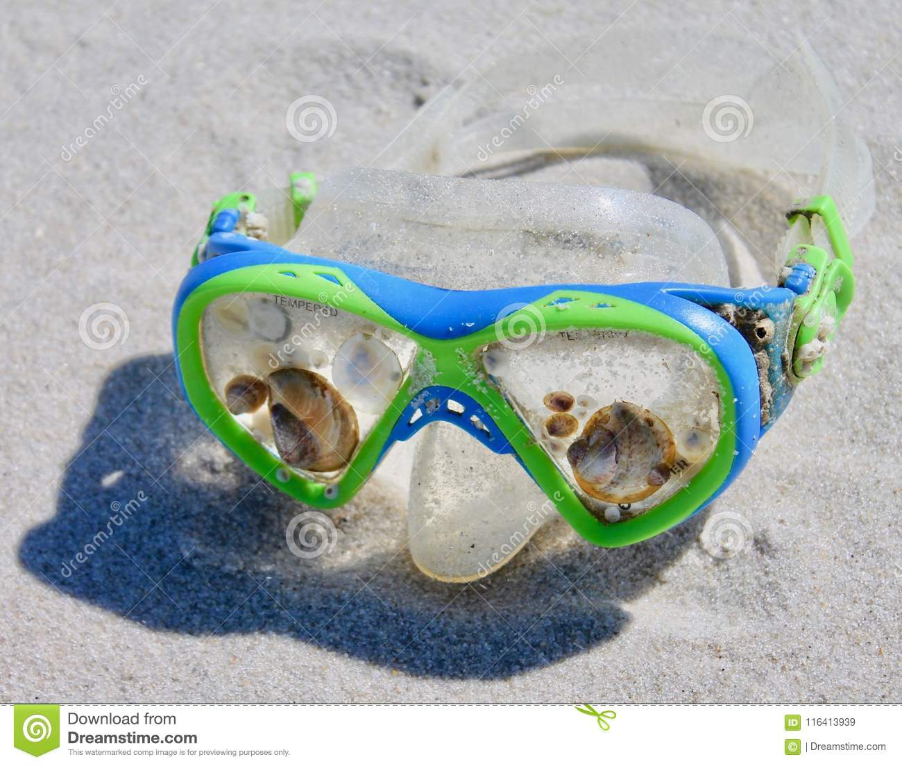 Island Beach State Park Nj: DIVE MASK ENCRUSTED WITH SEA LIFE Stock Image