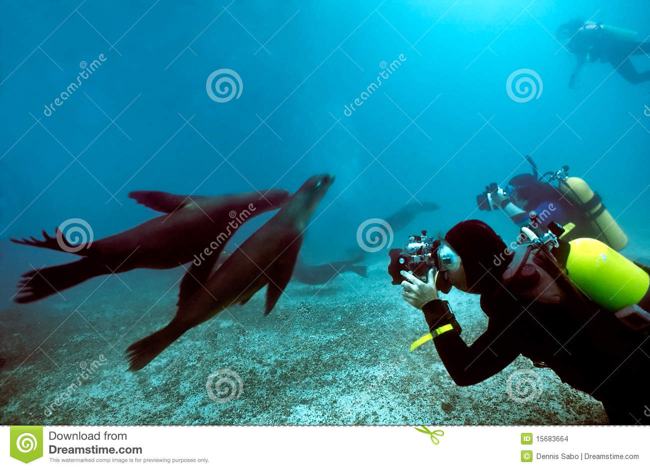 Divers and Galapagos Sea Lions