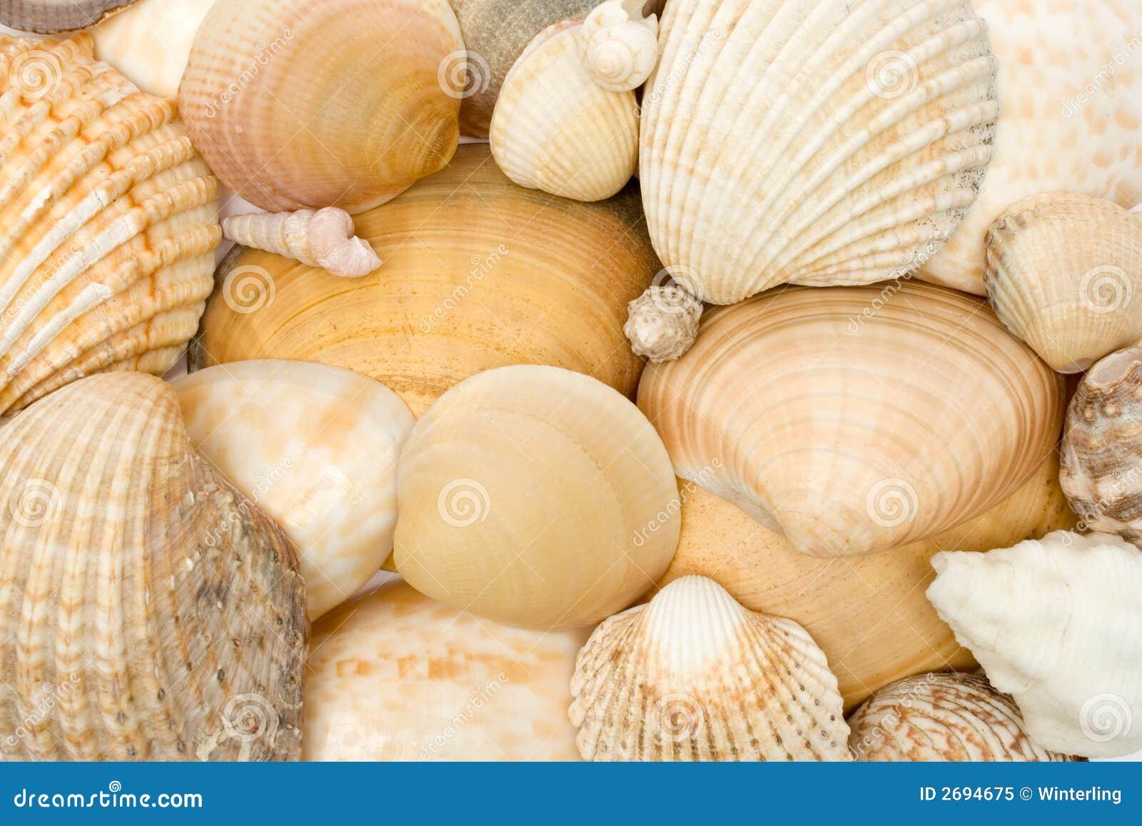 Divers Seashells