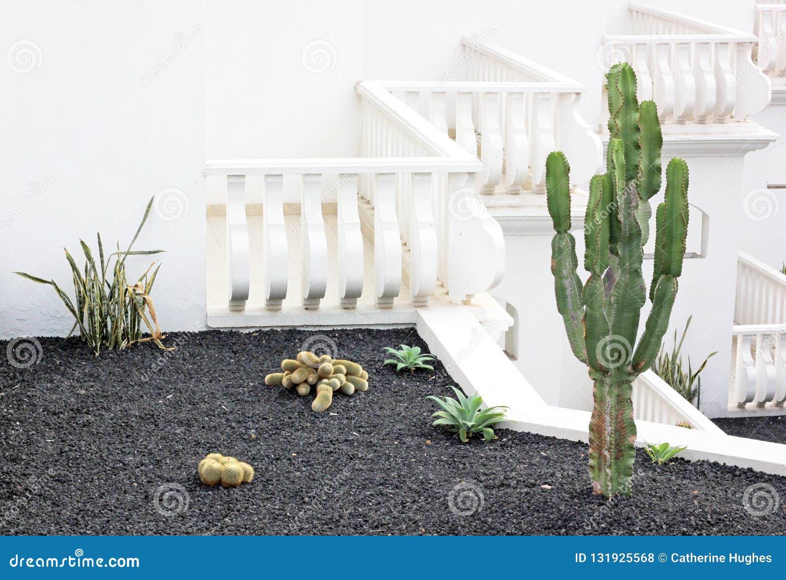 Diversa Especie Del Cactus En Un Jardín De La Terraza Foto