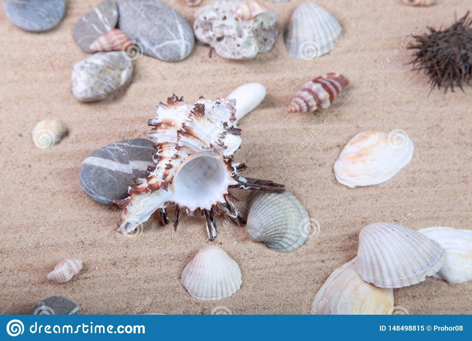 Diversas conchas marinas en la arena