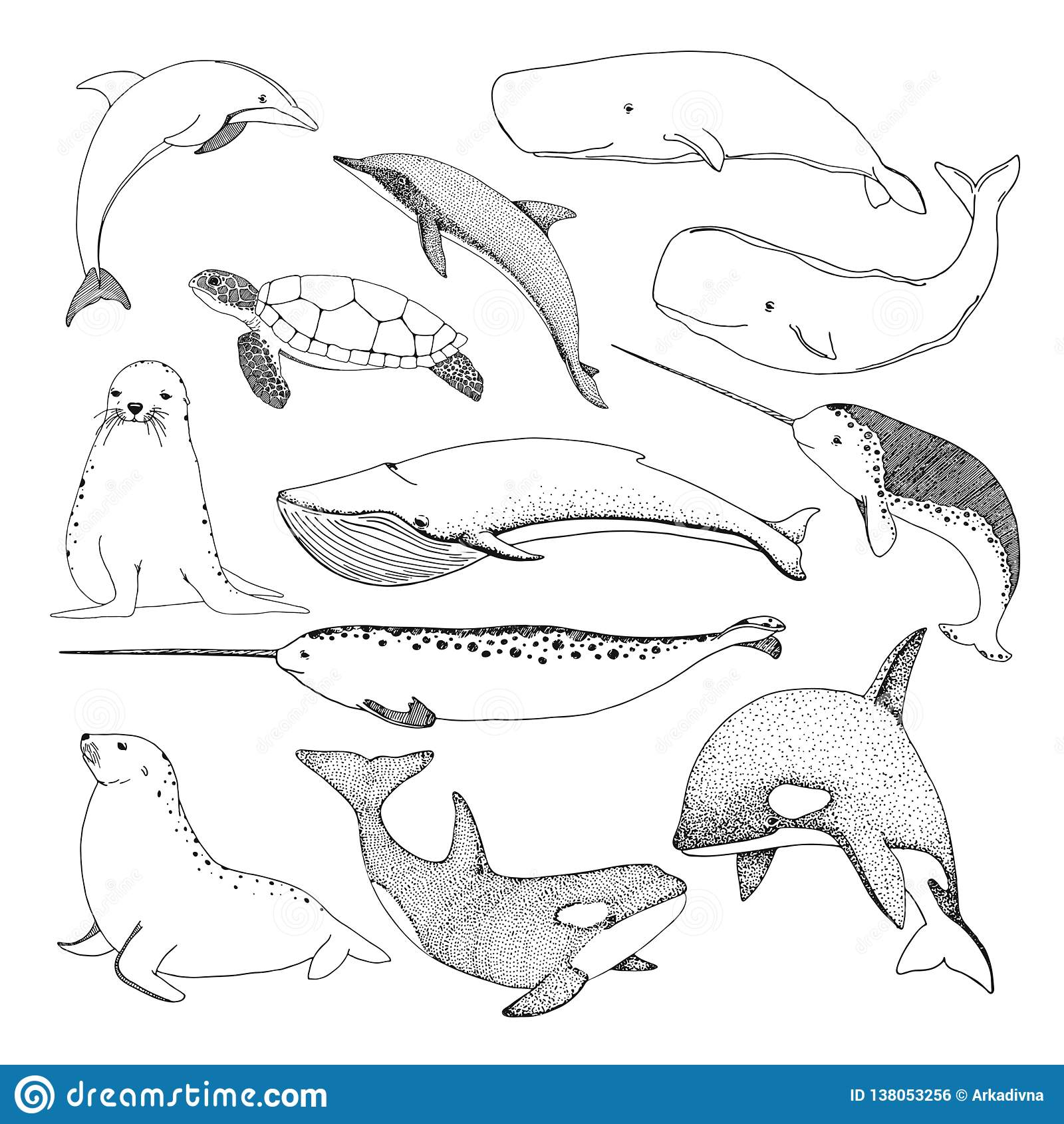 Diversas criaturas del mar del bosquejo Tortuga, ballena, morsa, delfín y otros