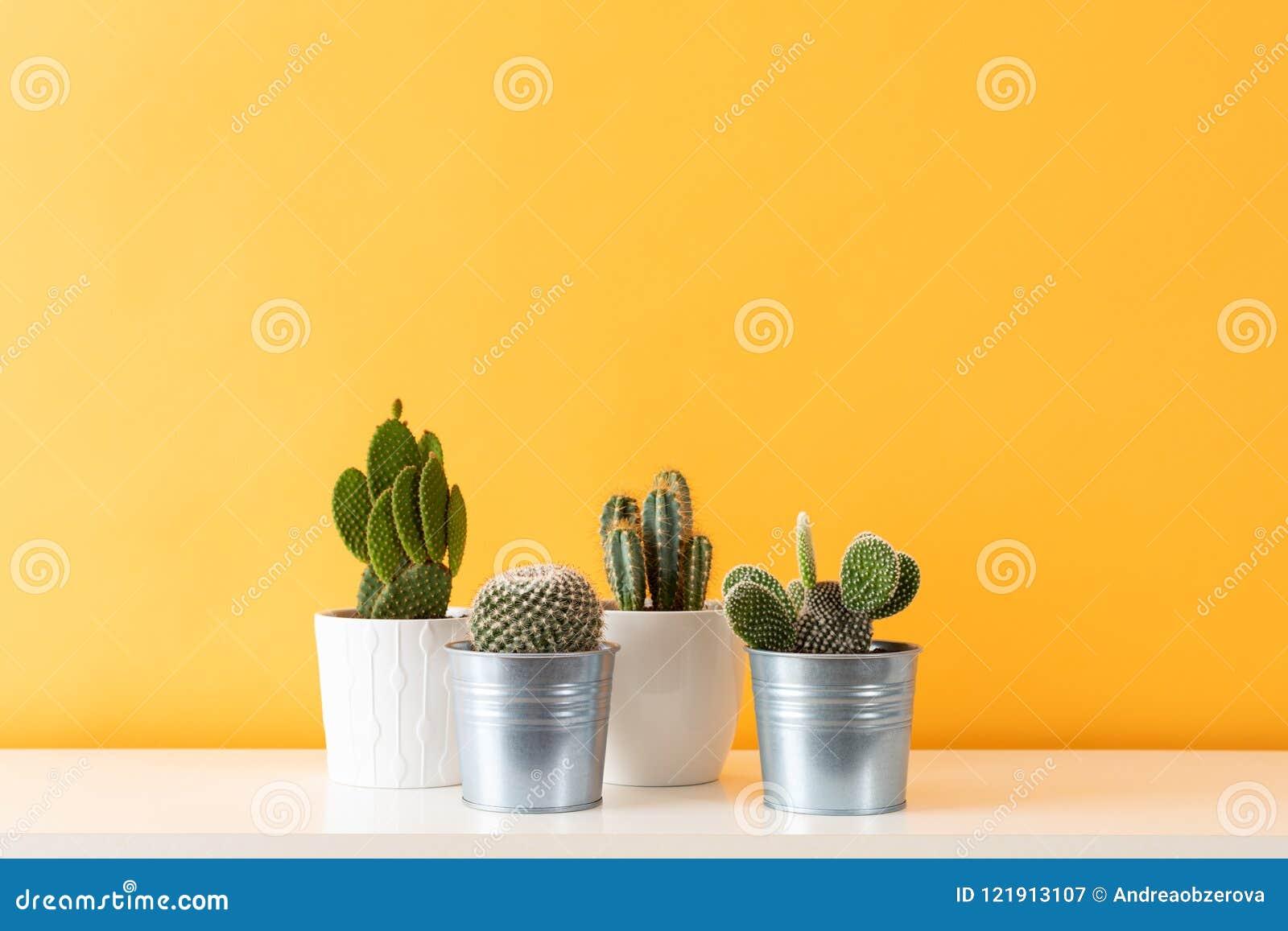 Diversas plantas del cactus en diversos potes Las plantas en conserva de la casa del cactus en el estante blanco contra mostaza e