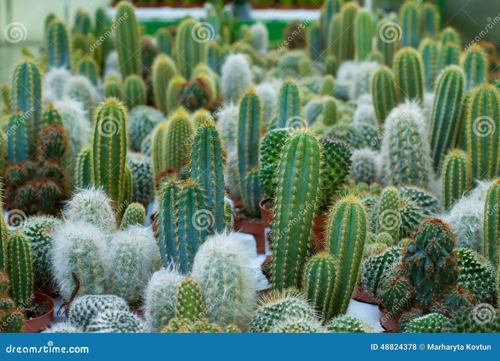 Diversas variedades de los cactus foto de archivo imagen for Cactus variedades