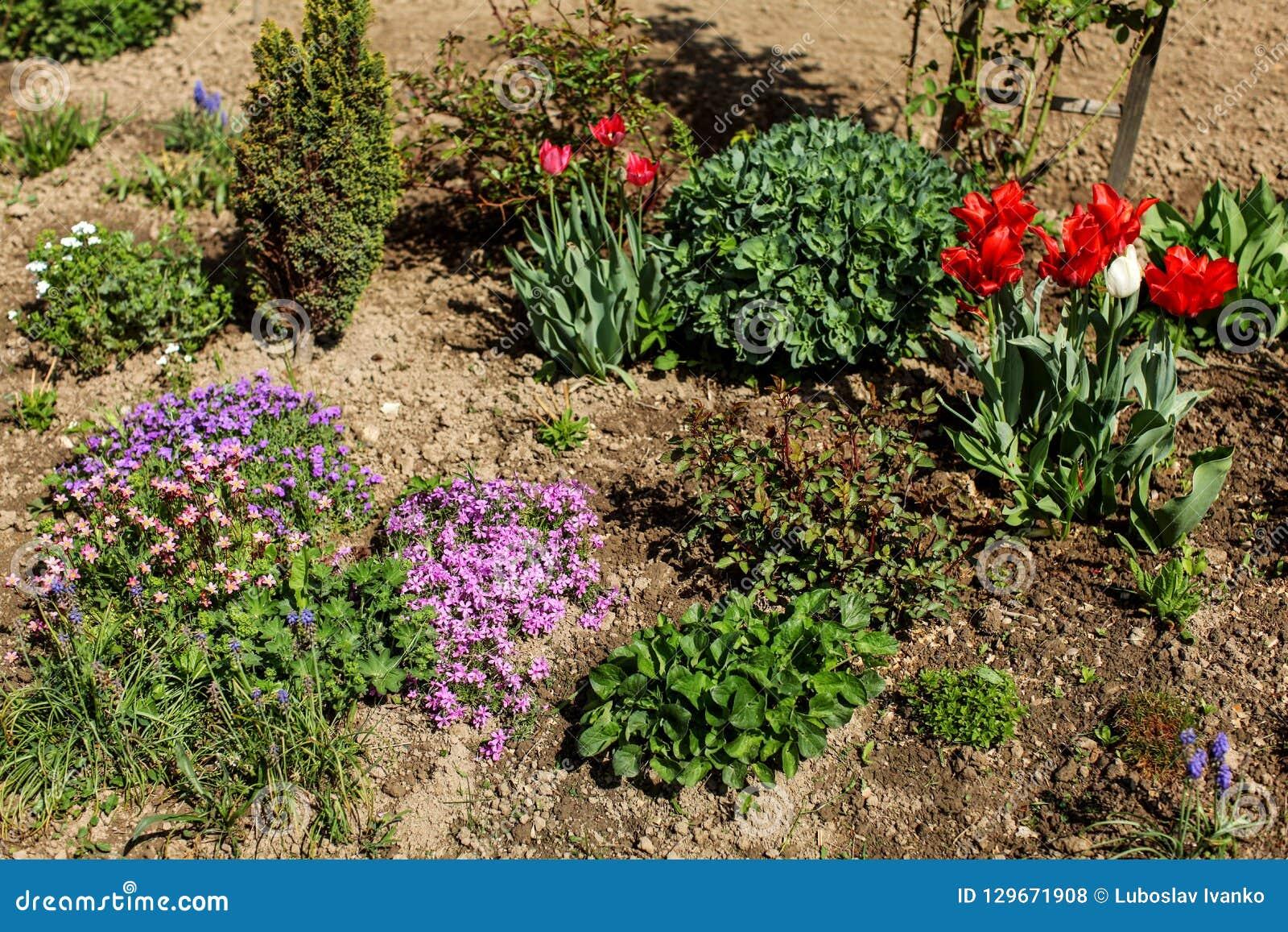 Struiken Met Bloemen Voor In De Tuin.Diverse Bloemen En Struiken Die In Zon Aangestoken Tuin